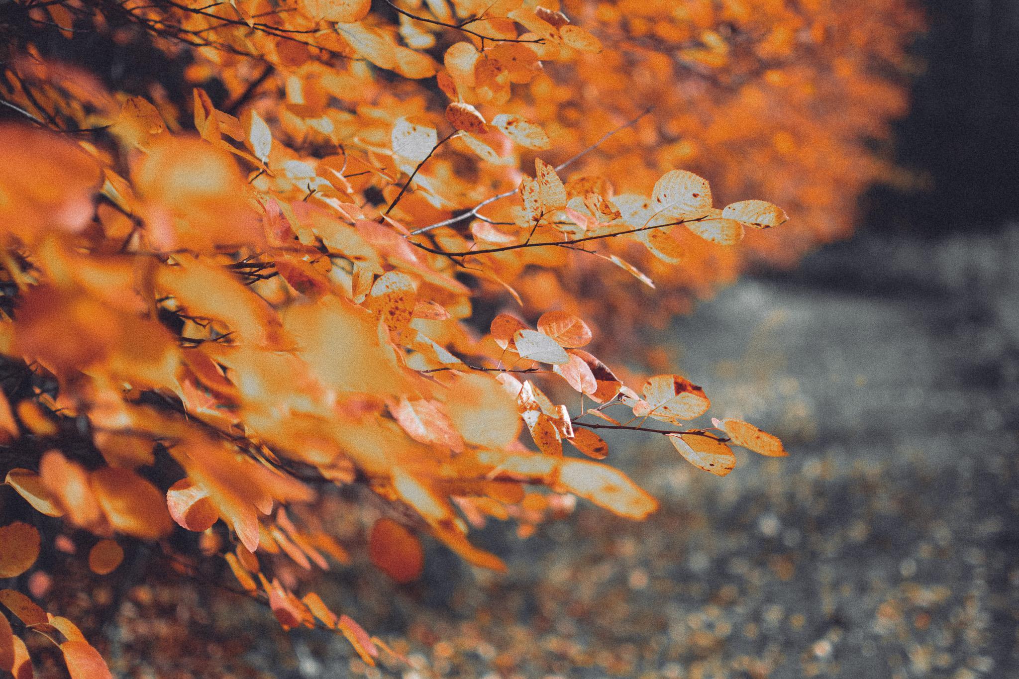 10-01-Fall-Rauhalahti-Haplop-1_LR edited_FB.jpg
