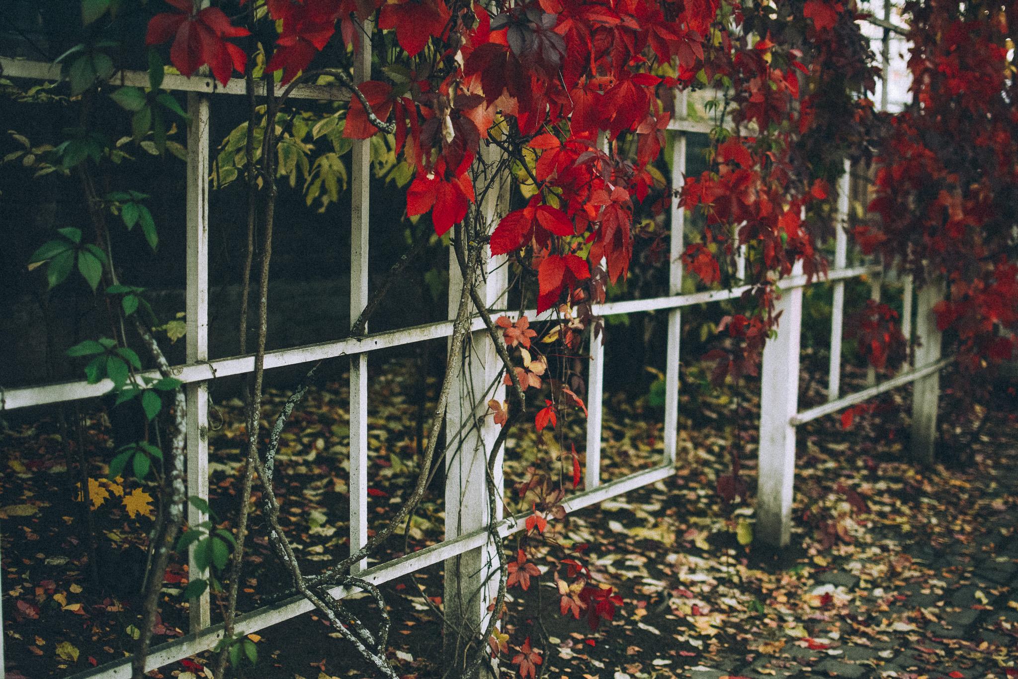 10-02-Spielplatz-fall-14_LR edited_FB.jpg