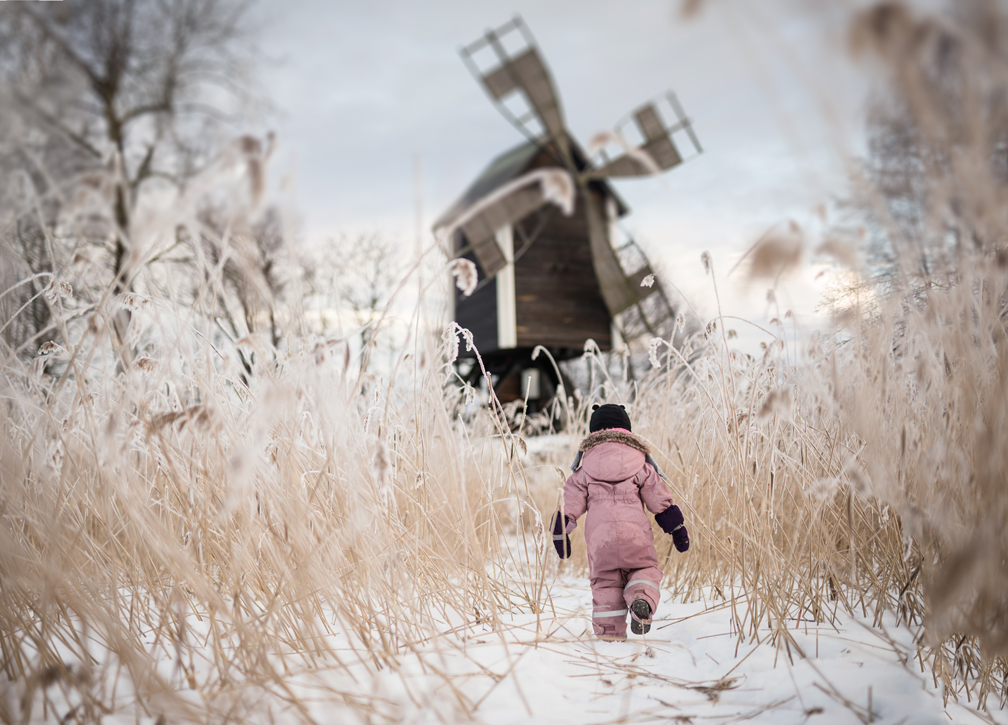 Child walking in dried reed towards mill