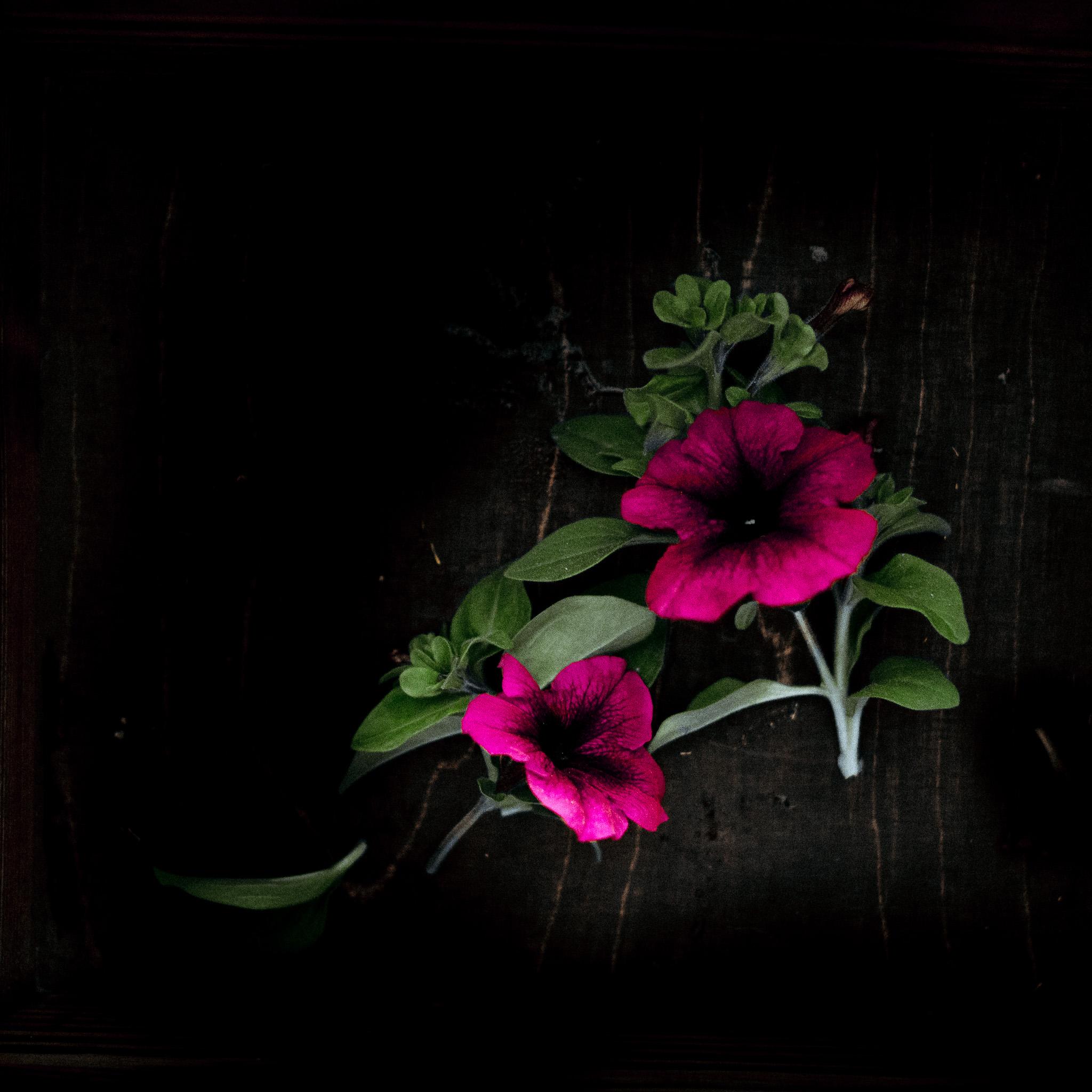 2017-06-11-flower-surprise-window-82_LR edited_web-2.jpg