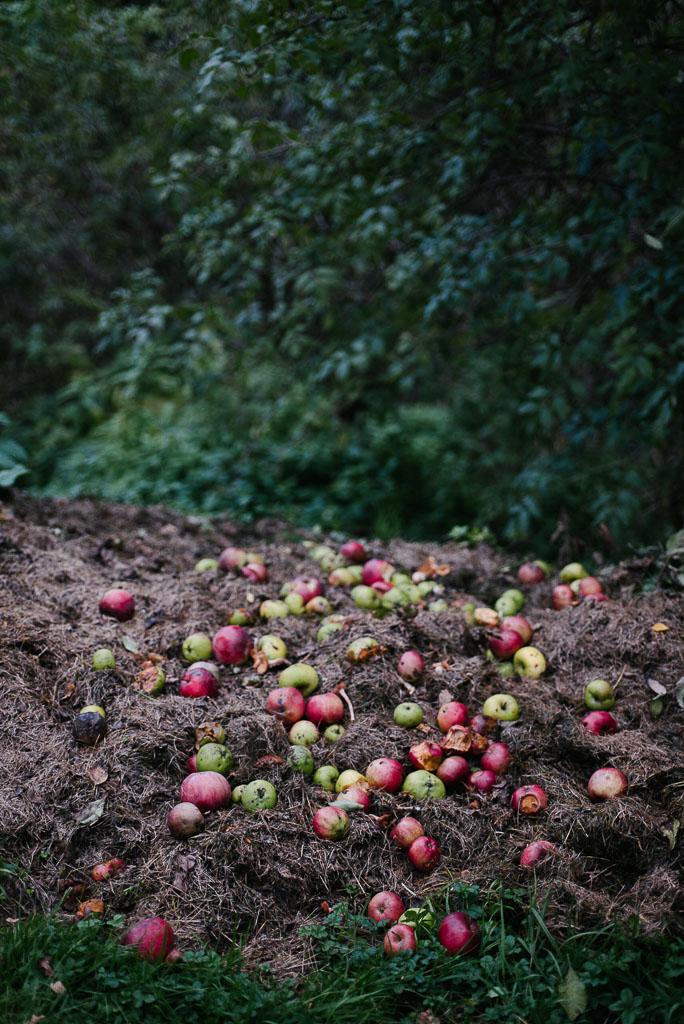 2017-09-29-apples-church-6_LR edited_web.jpg