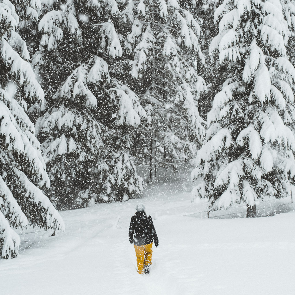 2018-01-04-snowstorm-Tanya-Hochmoor-49_LR edited_web.jpg