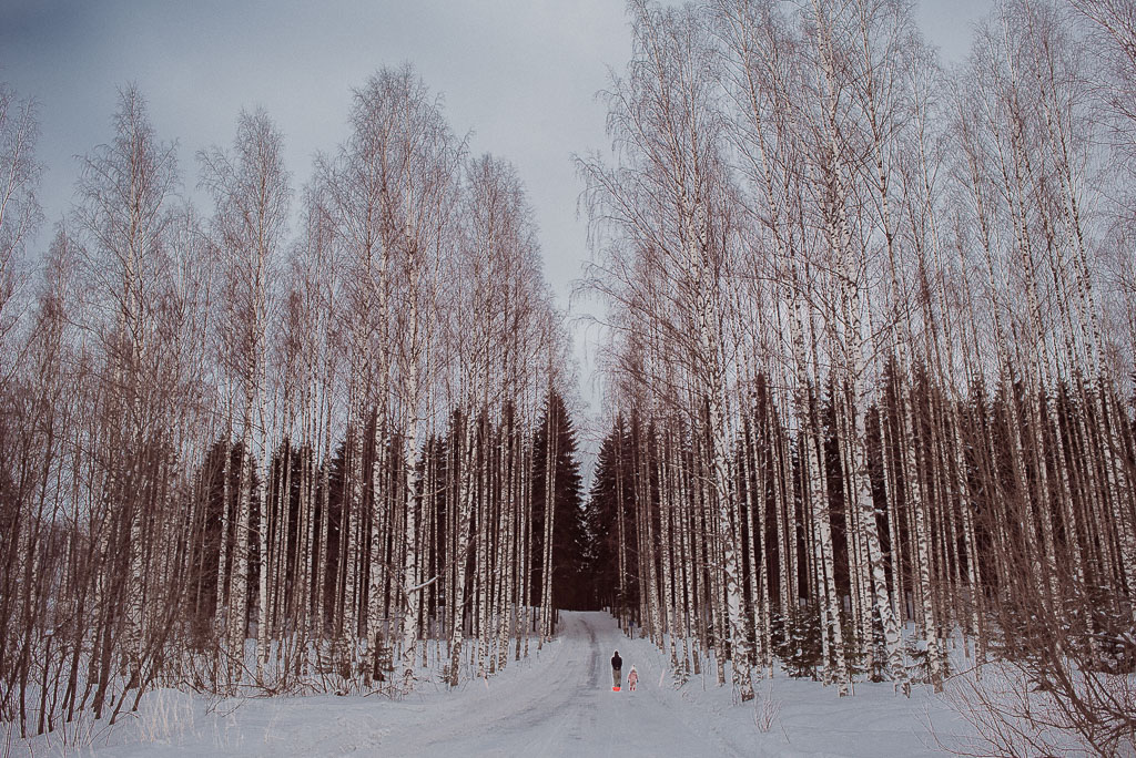 2018-02-25 - drivingonfrozenlake - trees - yellow -14_LR edited_web.jpg