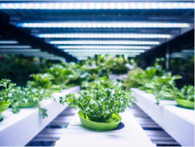 Growing the future of food with   precision agriculture    Learn more