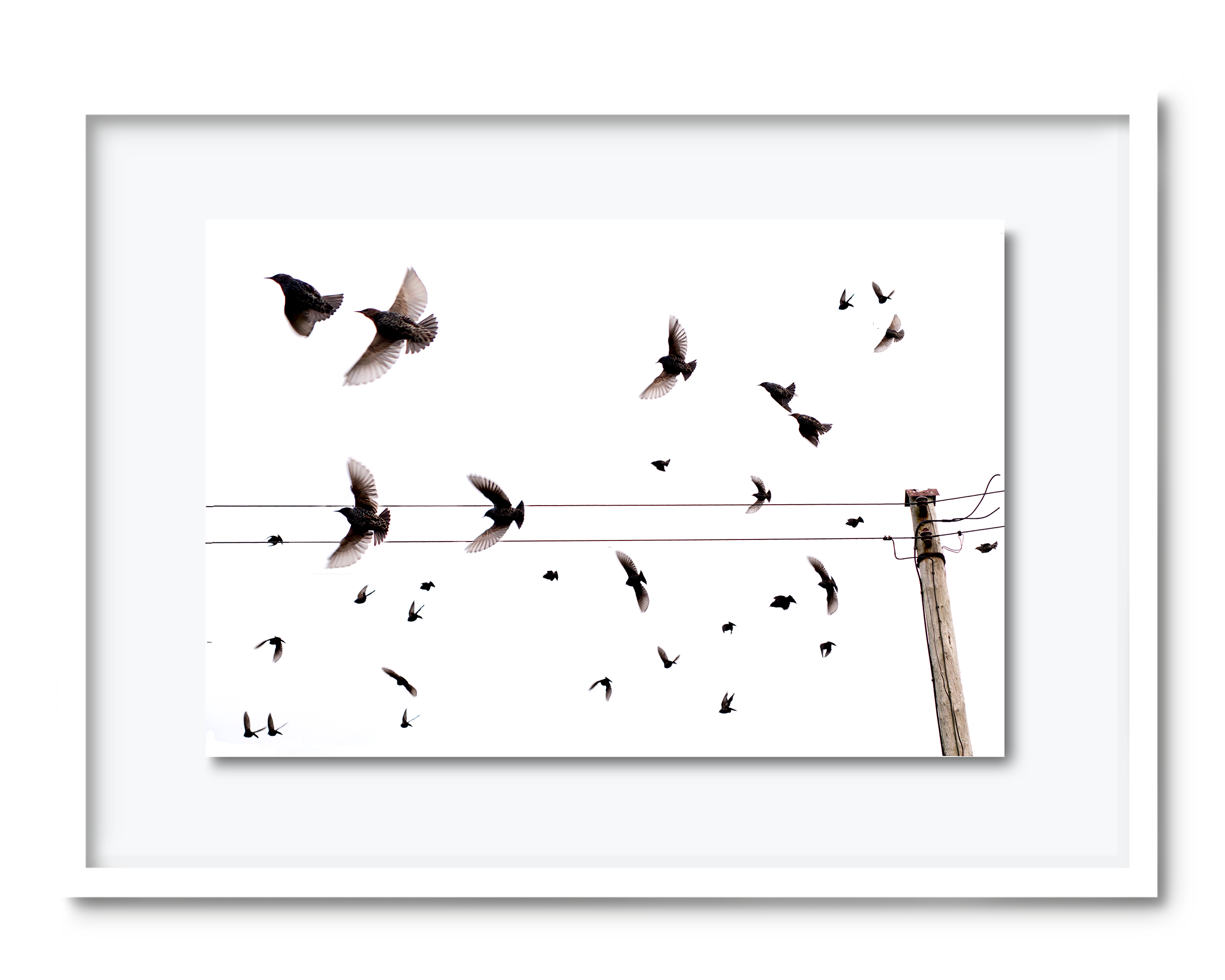 35b.david-pearce-starlings.png