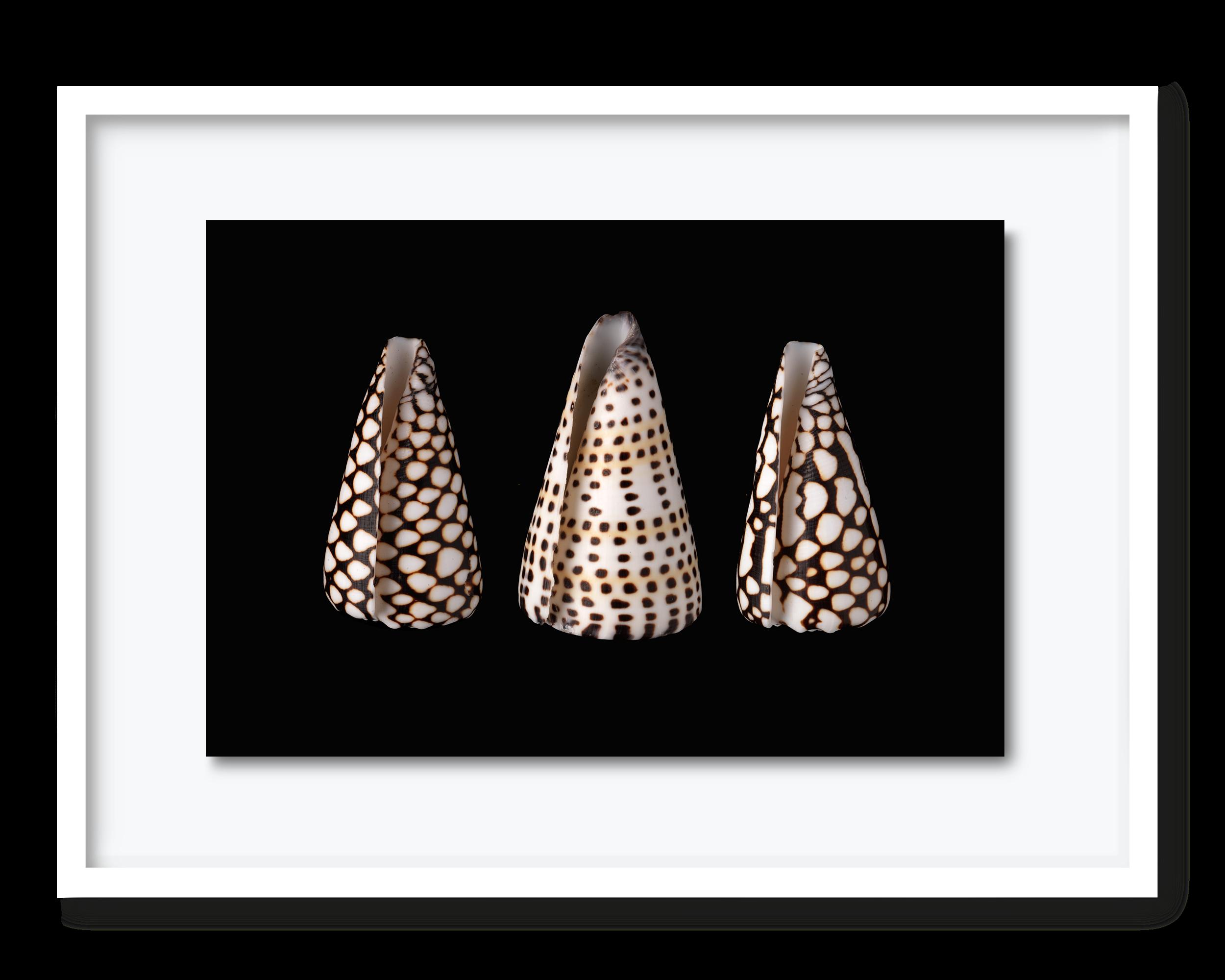 53.david-pearce-shells.png
