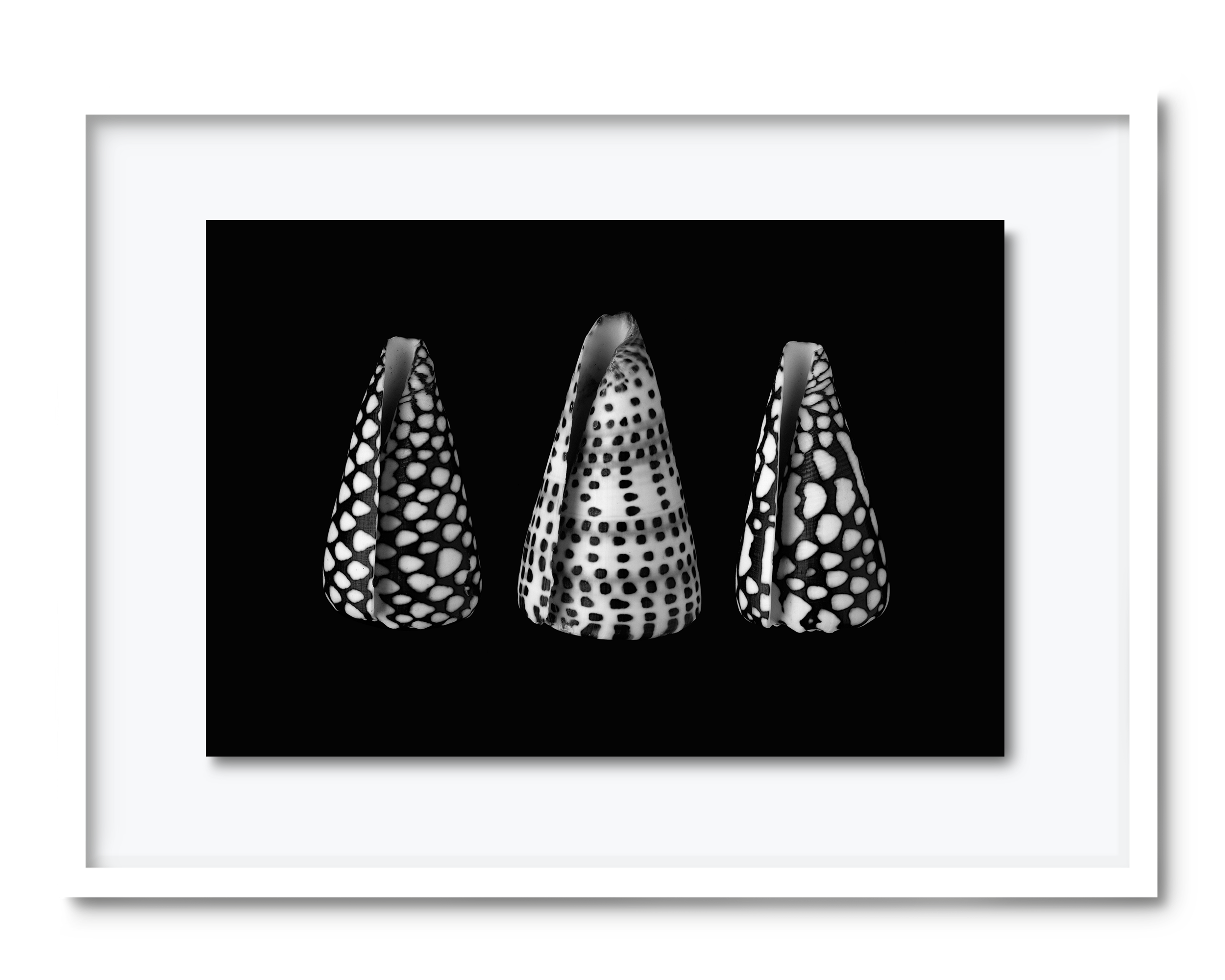54.david-pearce-shells.png