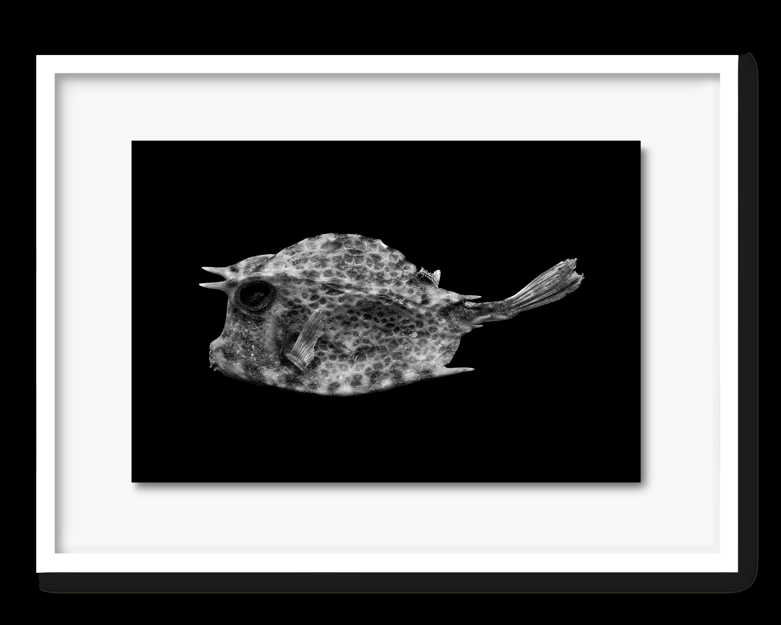 56.david-pearce-shellfish.png