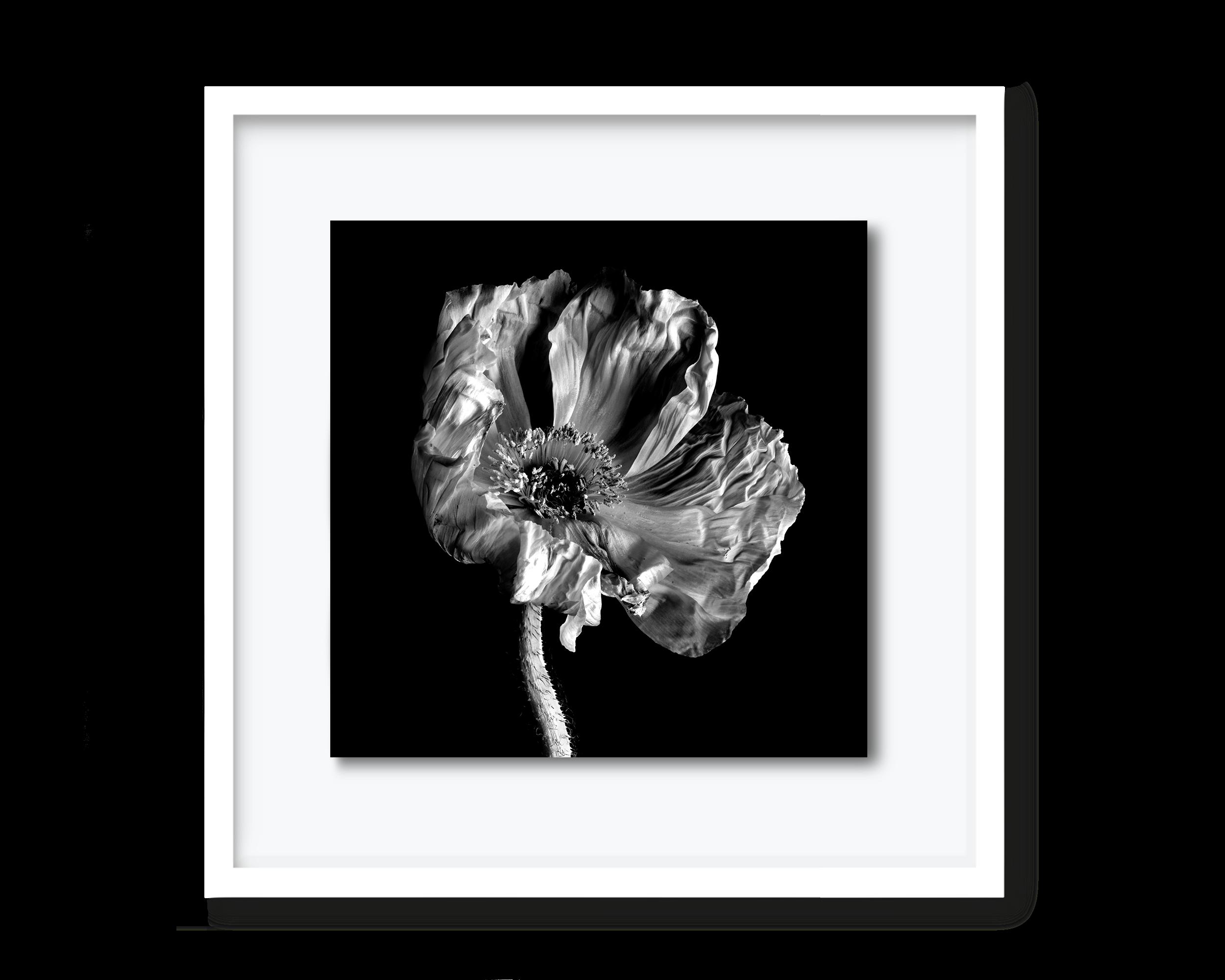 58.david-pearce-poppy.png