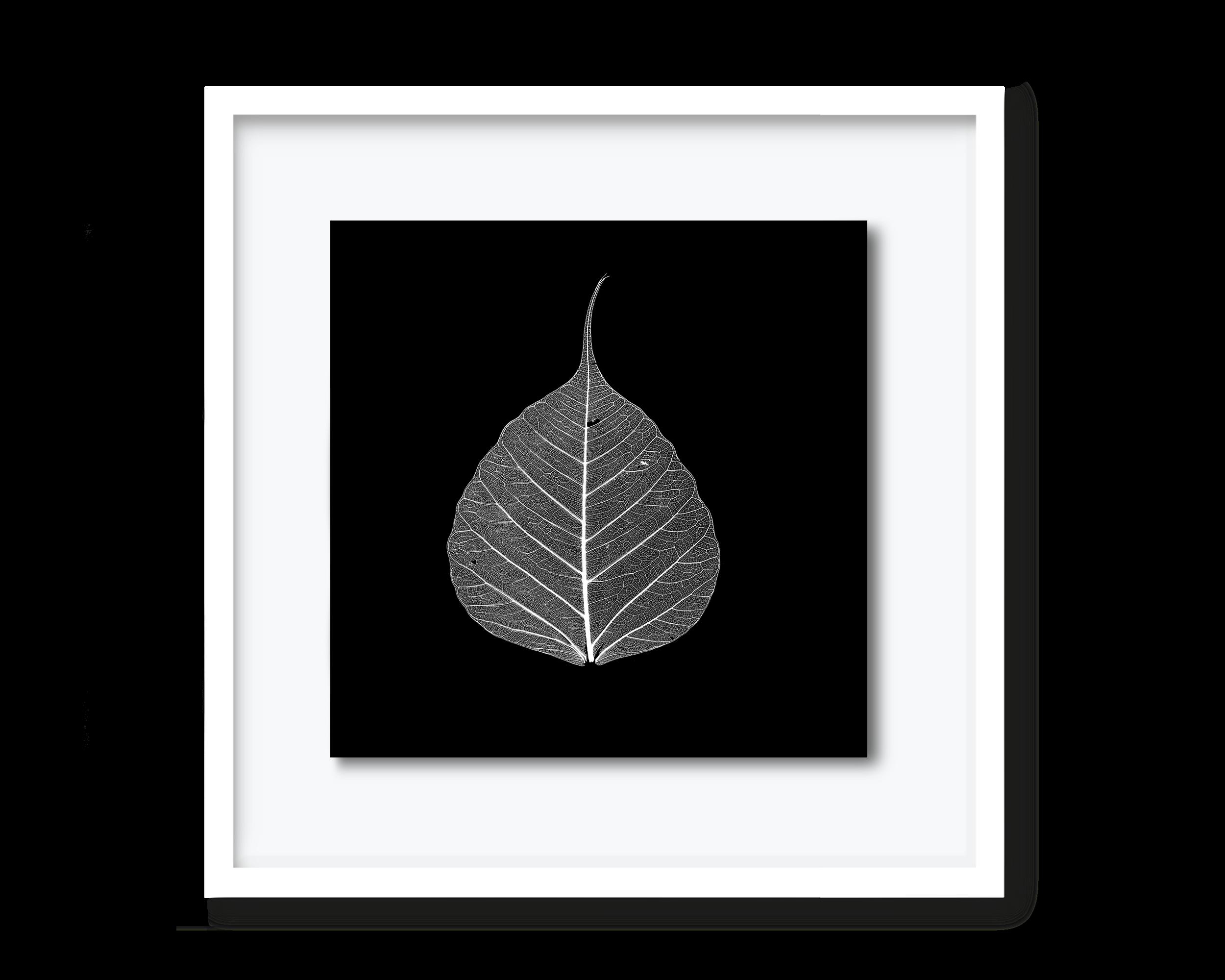 59.david-pearce-leaf.png
