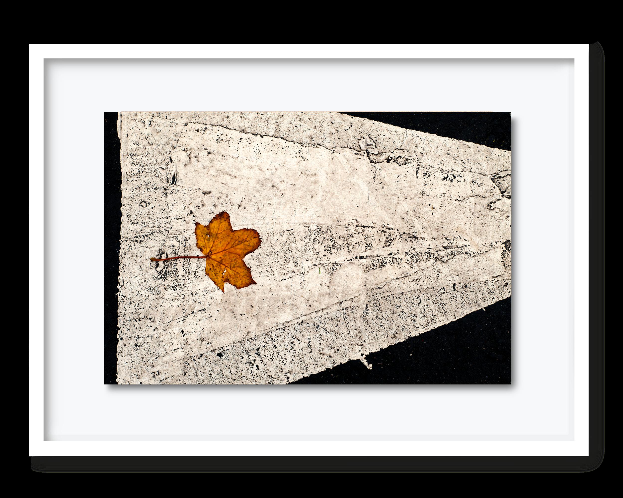45.david-pearce-road-marking.png