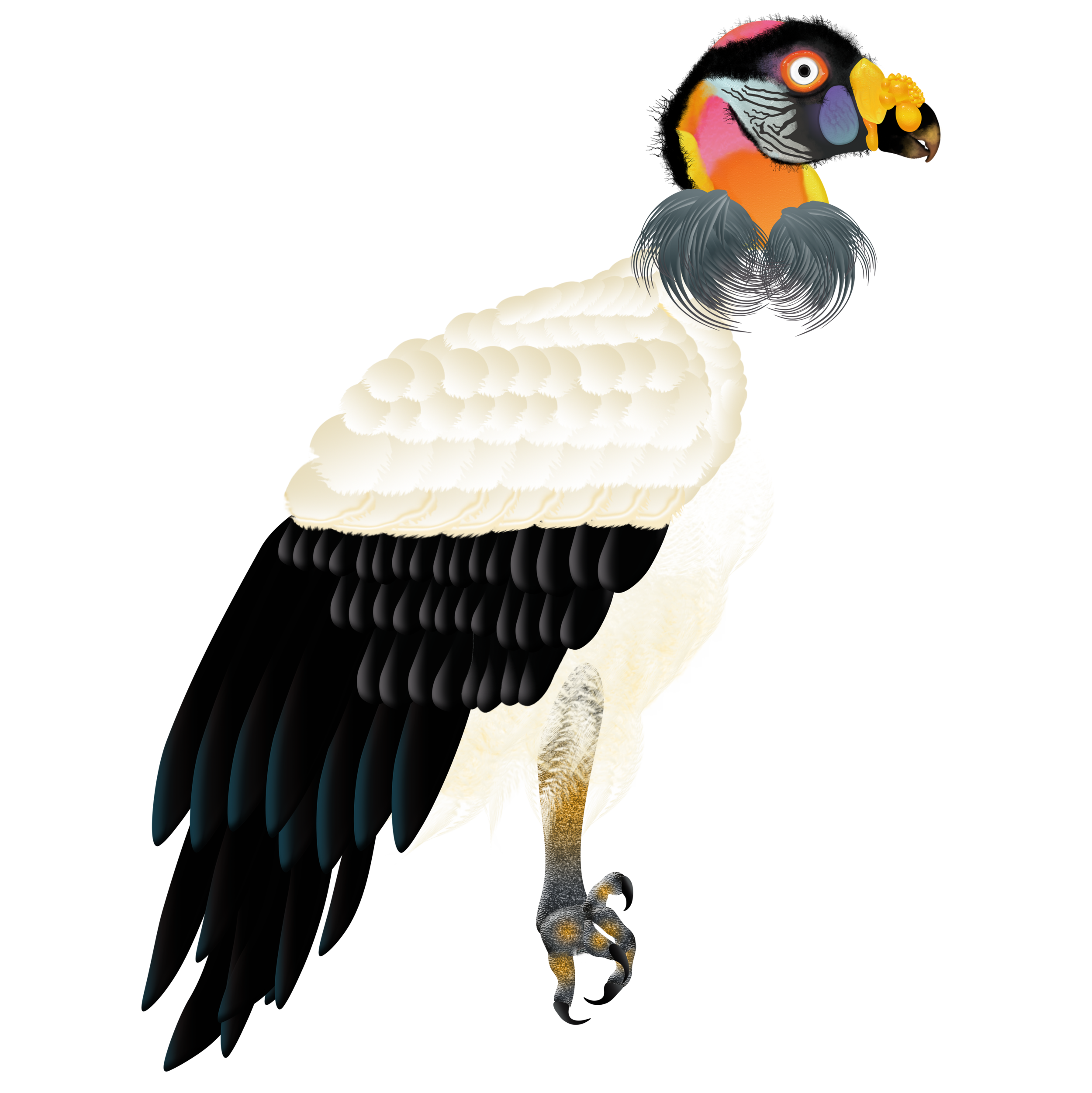 King-Vulture_.png