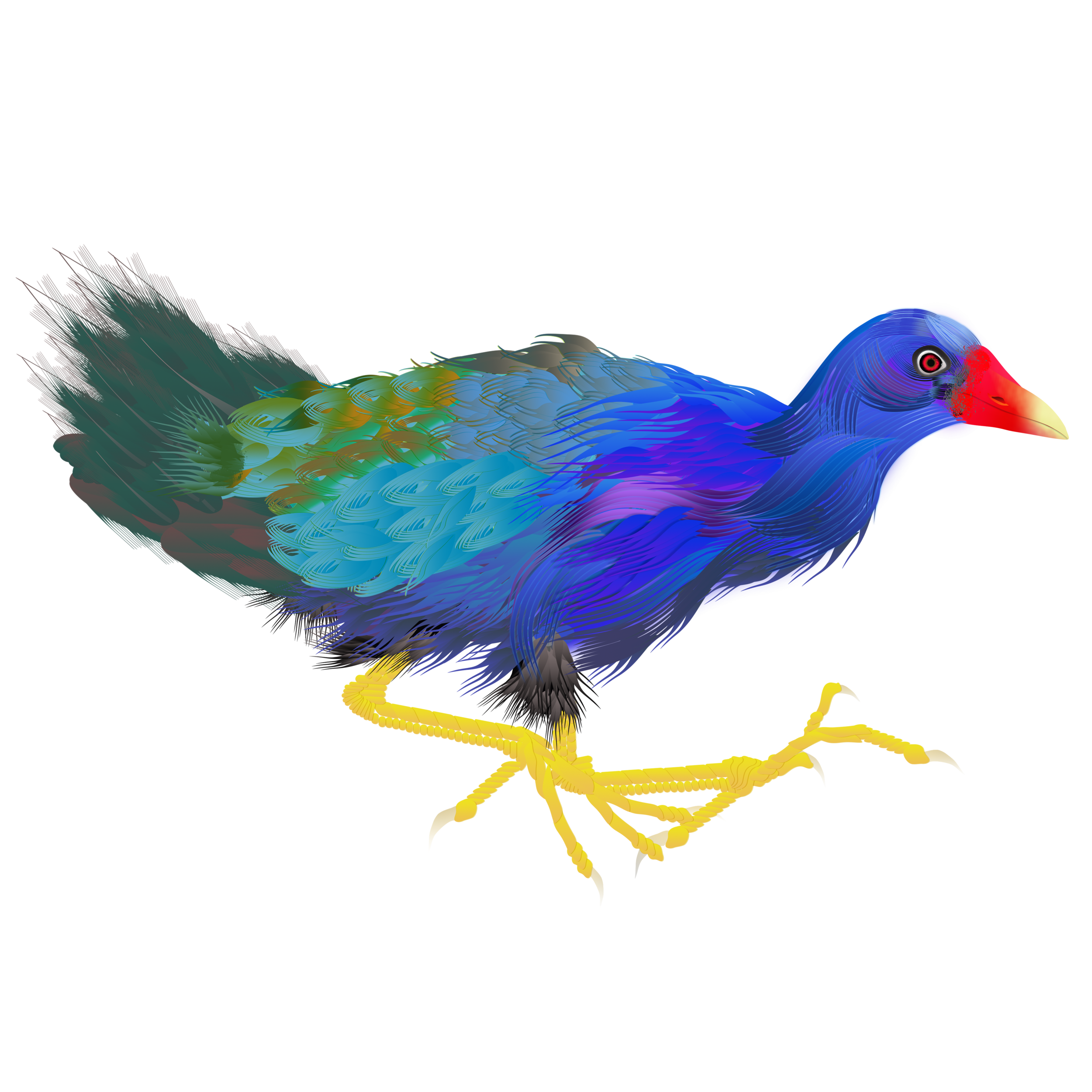 Purple Gallinule..png