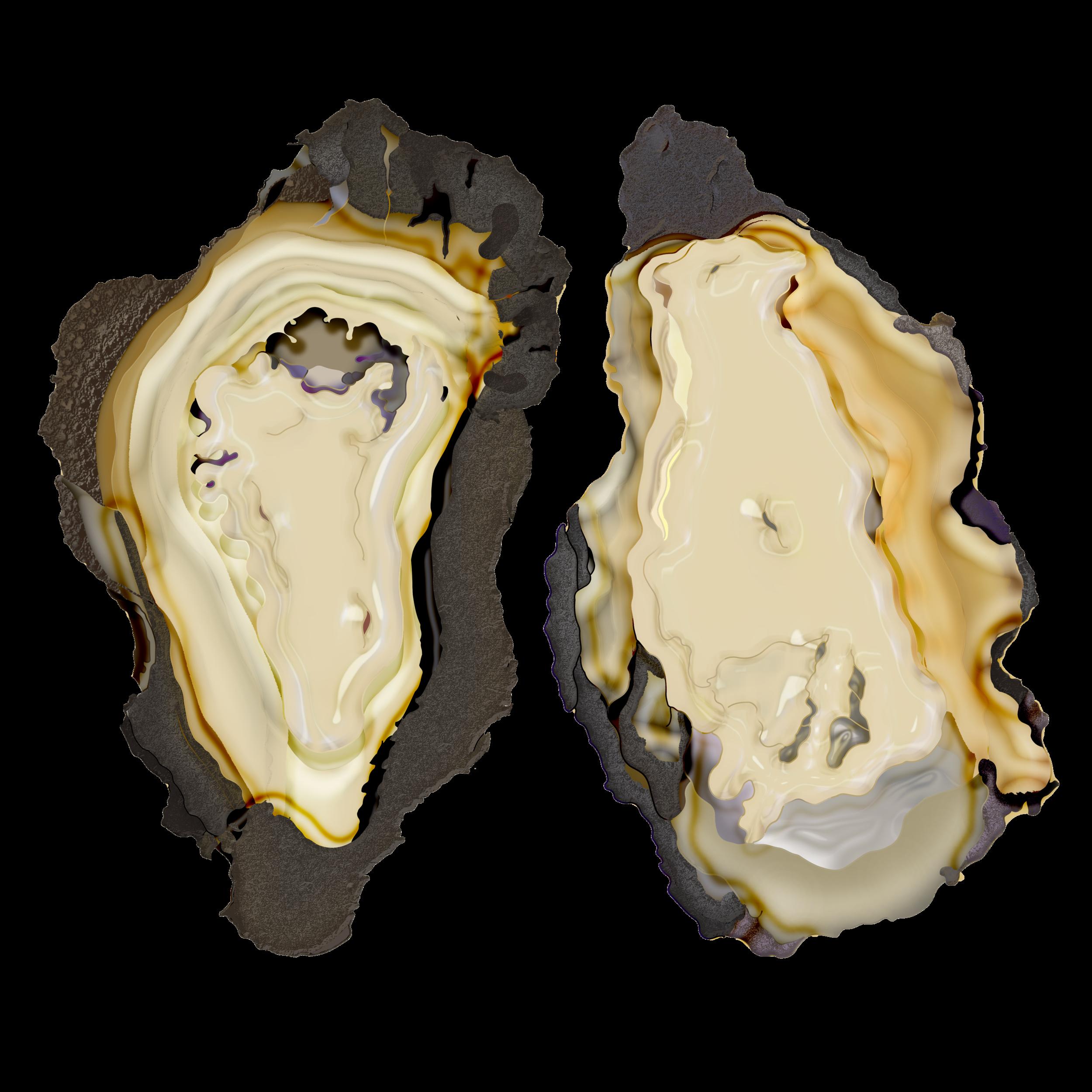 oyster mergedd.png
