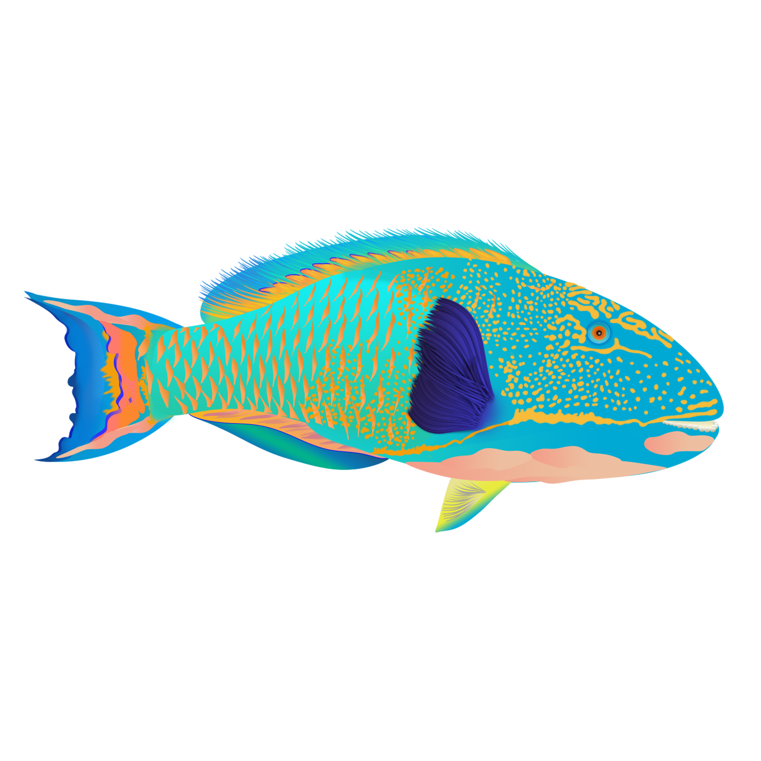 Spotted Parrotfish_merged.png