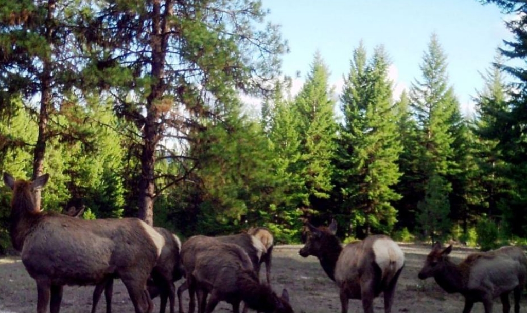 2015-04-02 - Elk Party on SR 2.0 Build Site