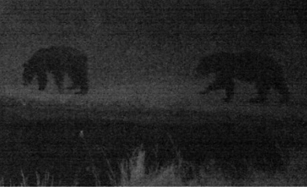 2015-08-08 - 2 Black Bears at Night near SR 2.0 Pond