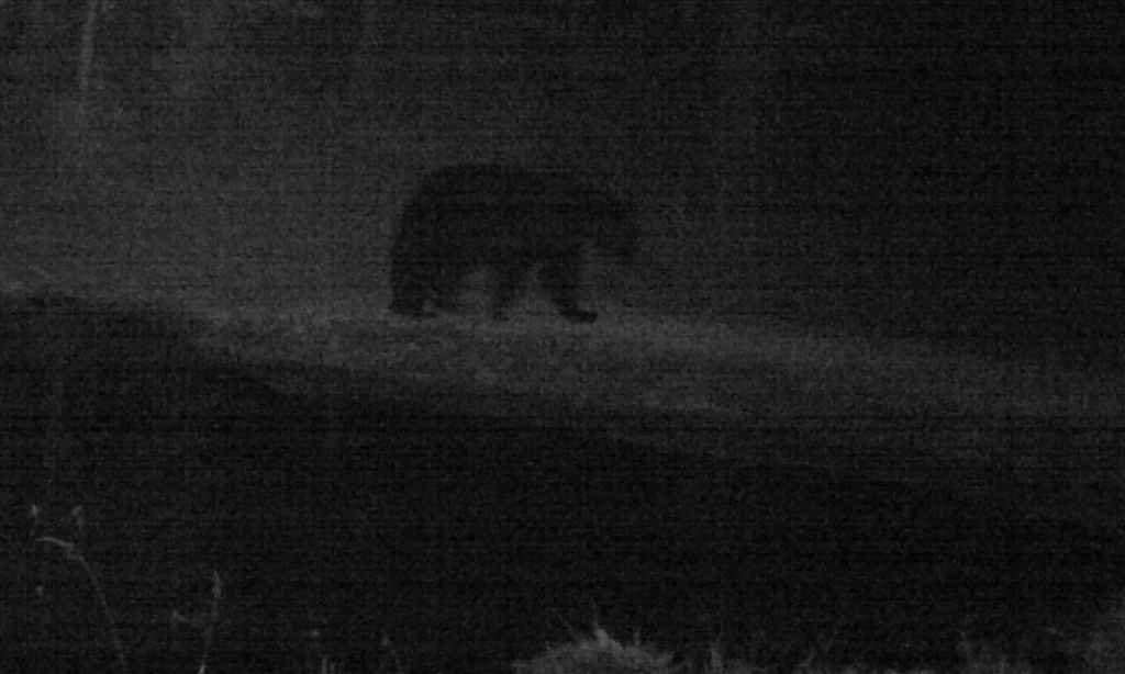 2015-10-15 - Black Bear near SR 2.0 Pond