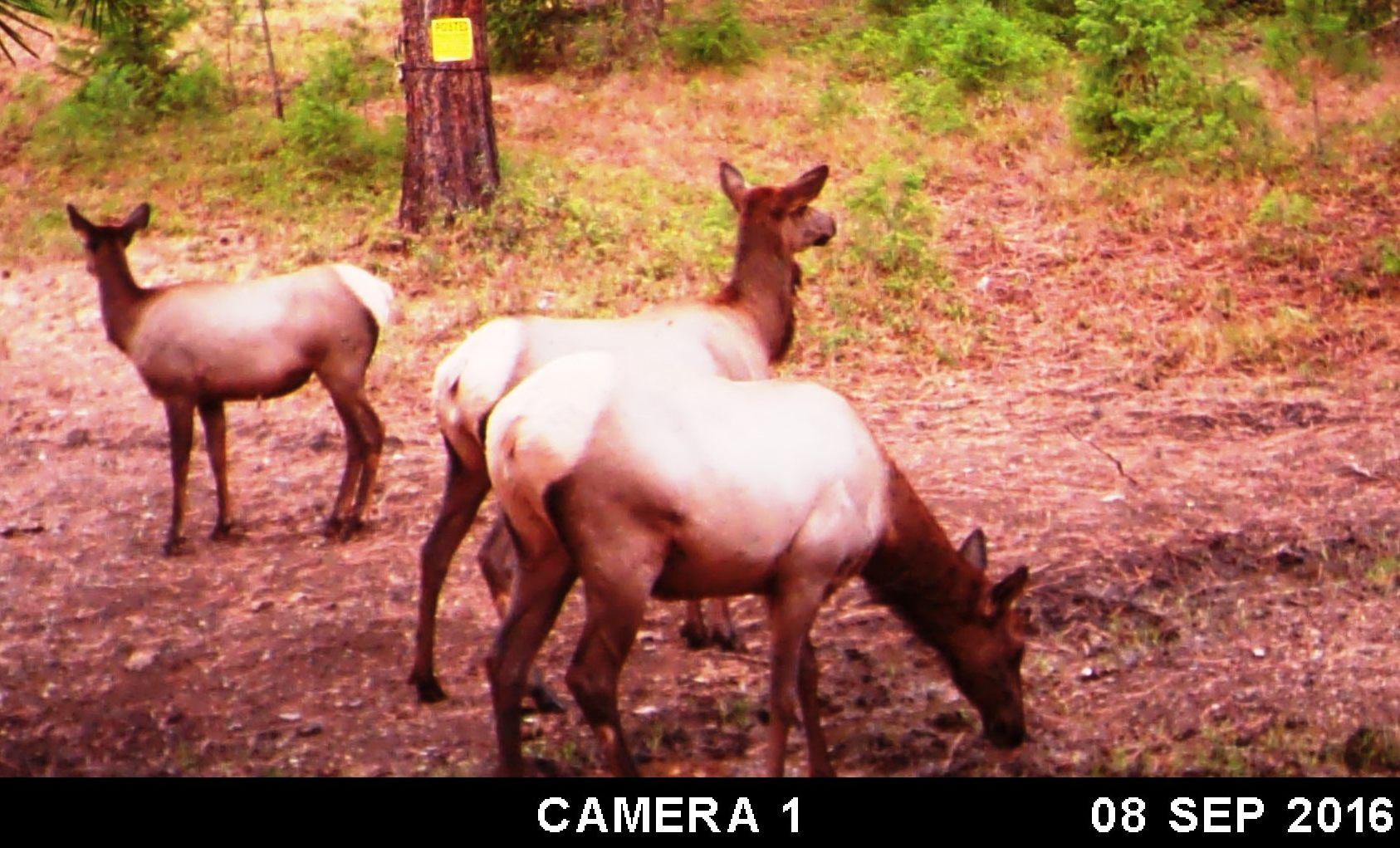 2016-08-22 - SR2 Elk