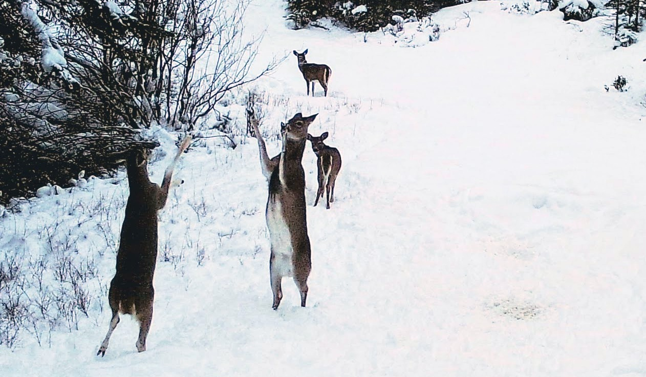 2019-02-12 Deer Dancing at SR2.jpg