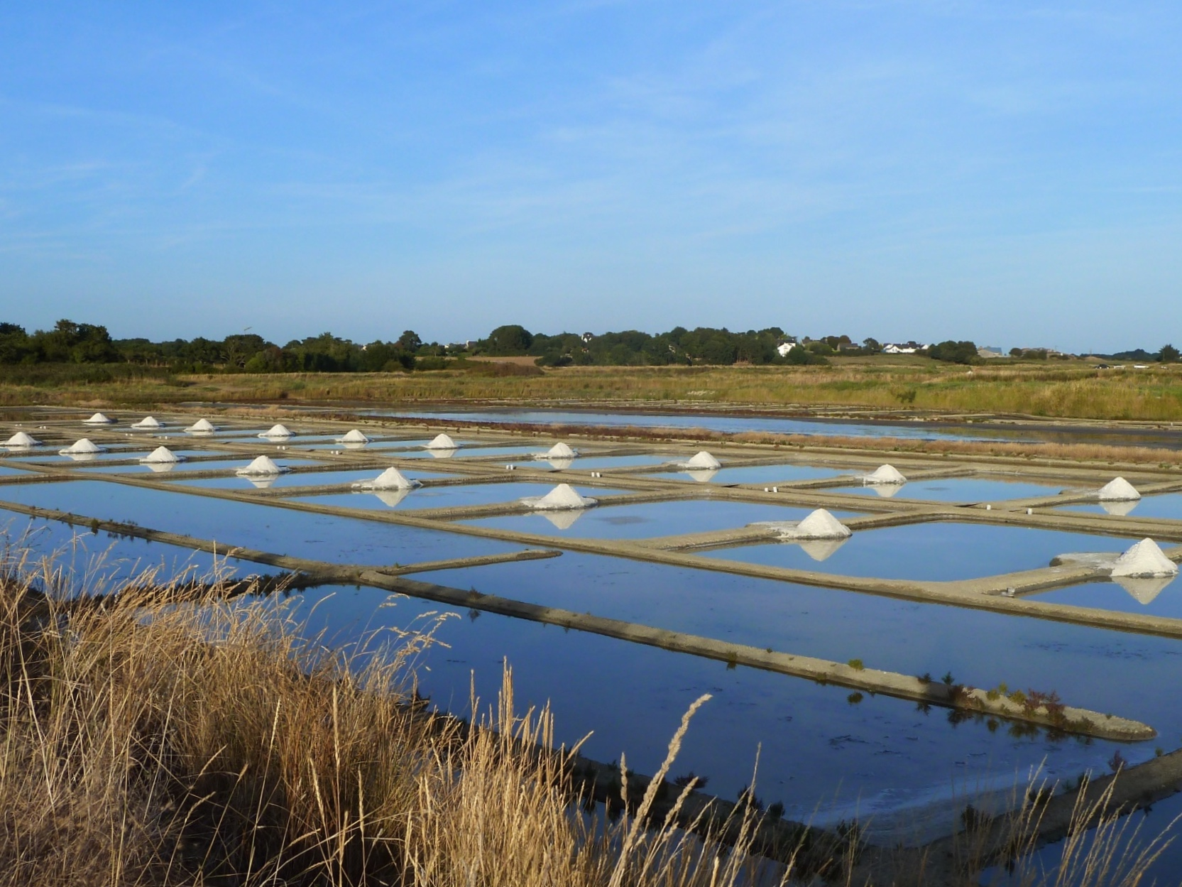 Our salt marshes during harvest season in Brittany, France.