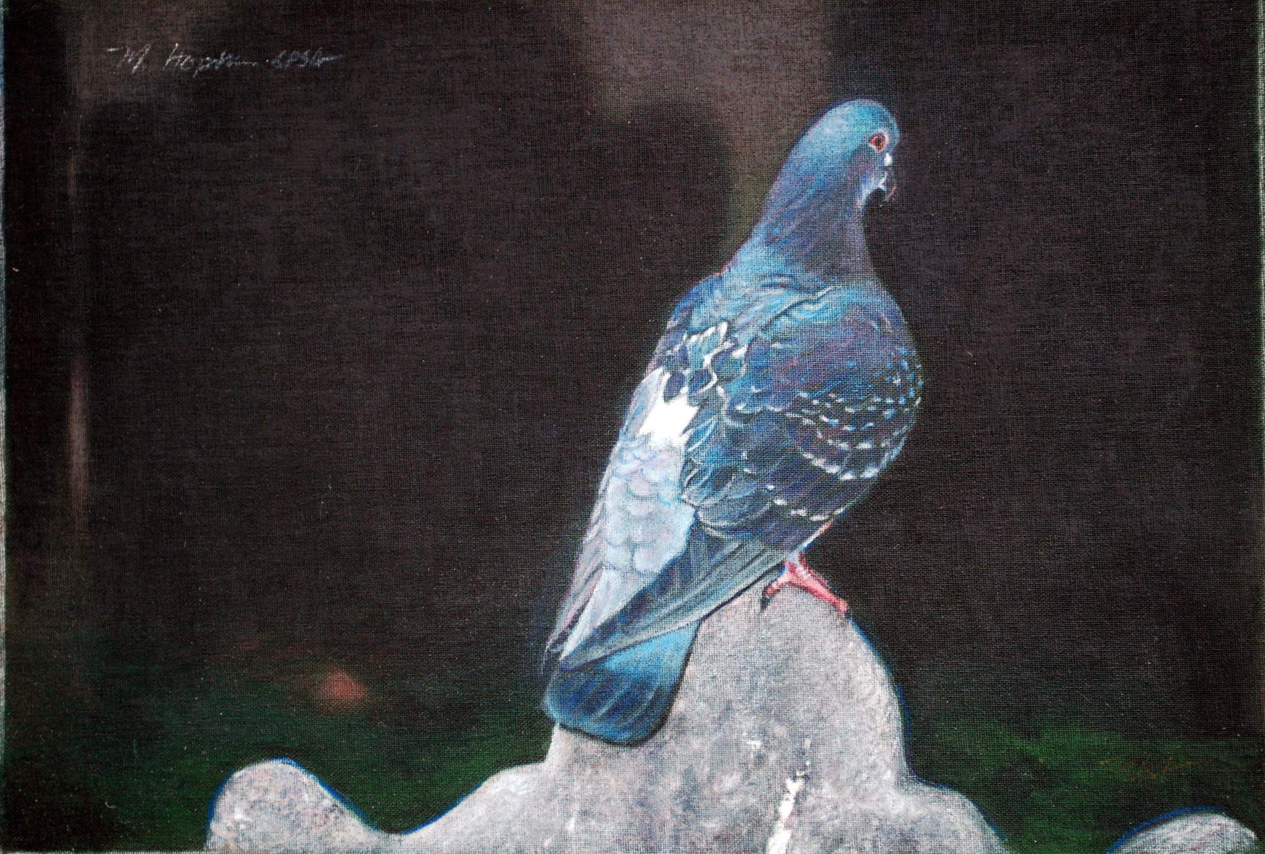 Trinity-Pigeon-11.jpg