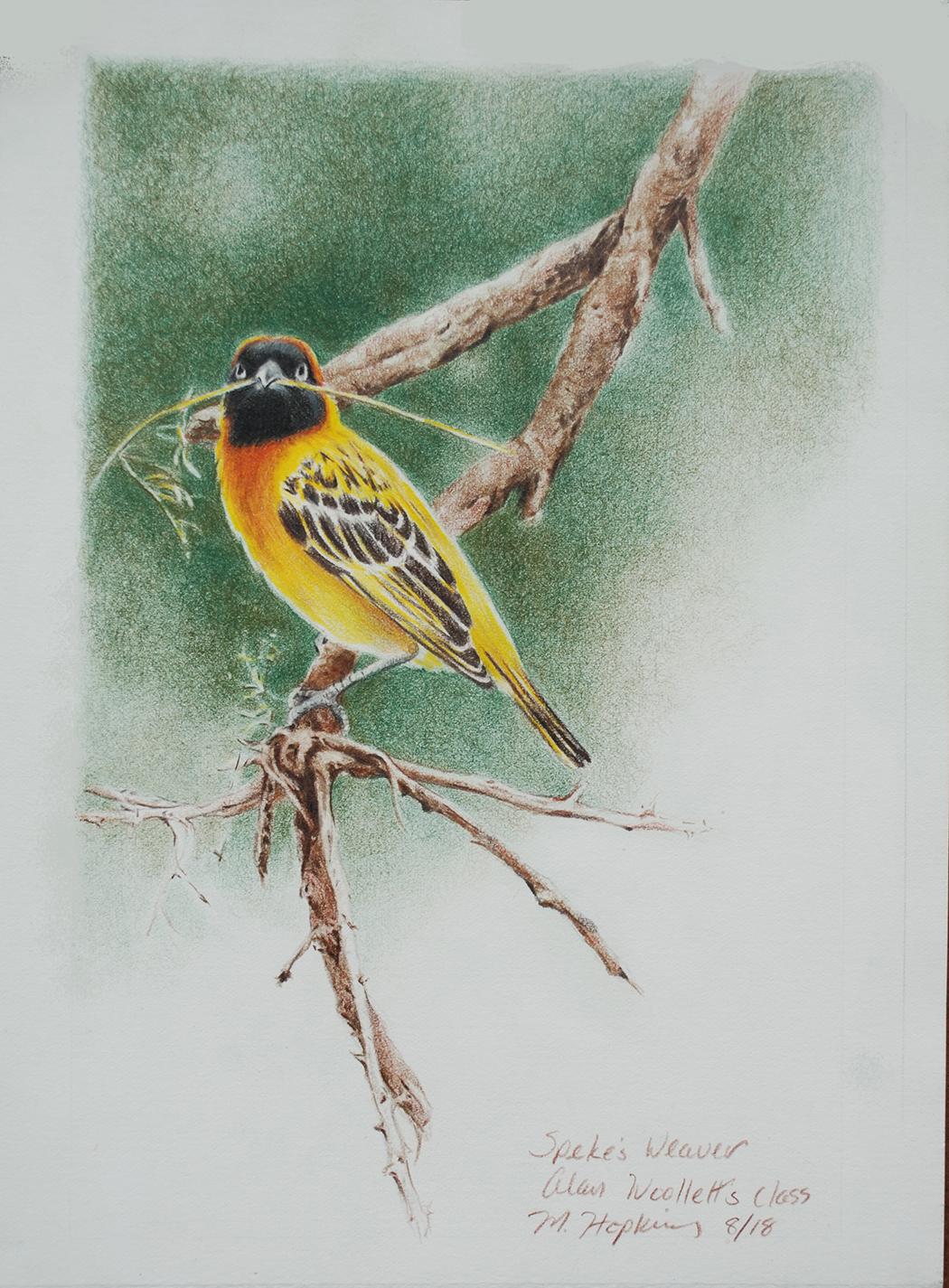 Spekes Weaver- Colored Pencil Workshop with Alan Woollett.