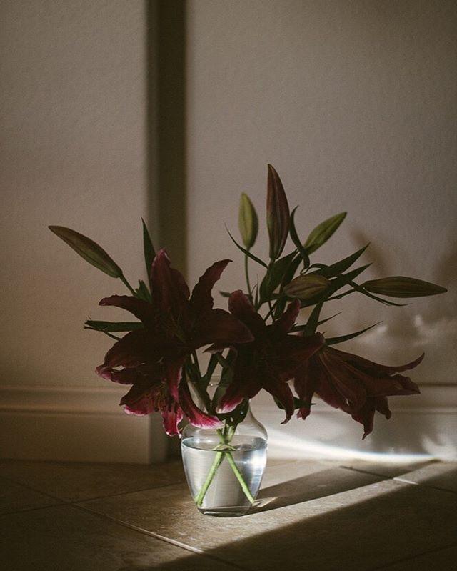 Always playing with light. #bennettbrownphotography - - - - #botanica #botanical #naturalphotographer #naturephotography #loversoflight #chasinglight #dark #lillies #floral #flowerarrangement #photographer #portraitphotographer #light #lightbeams #nikonnofilter