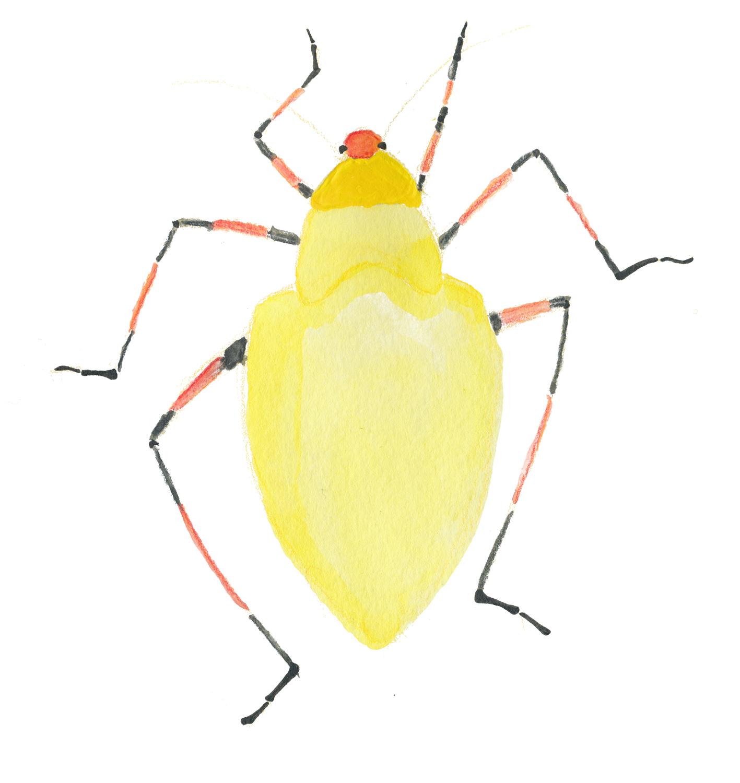 beetle1.jpg
