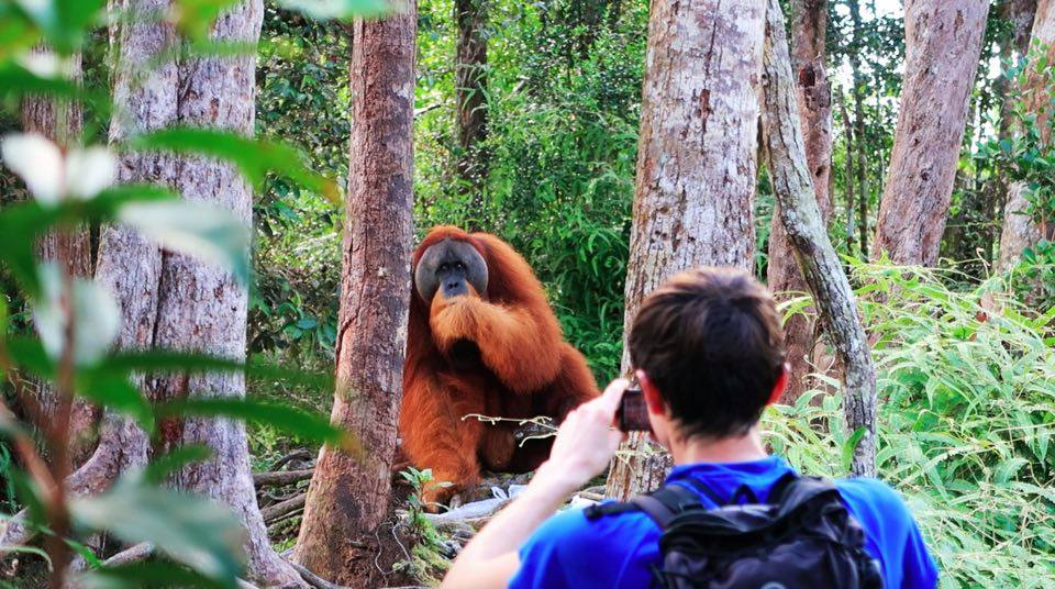 educational orangutan hike trek in sumatra