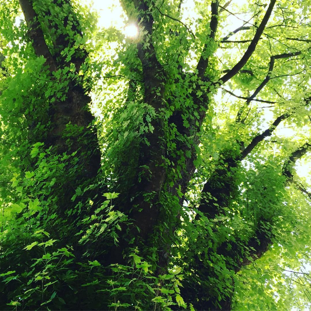 greentree-vancouver.jpg