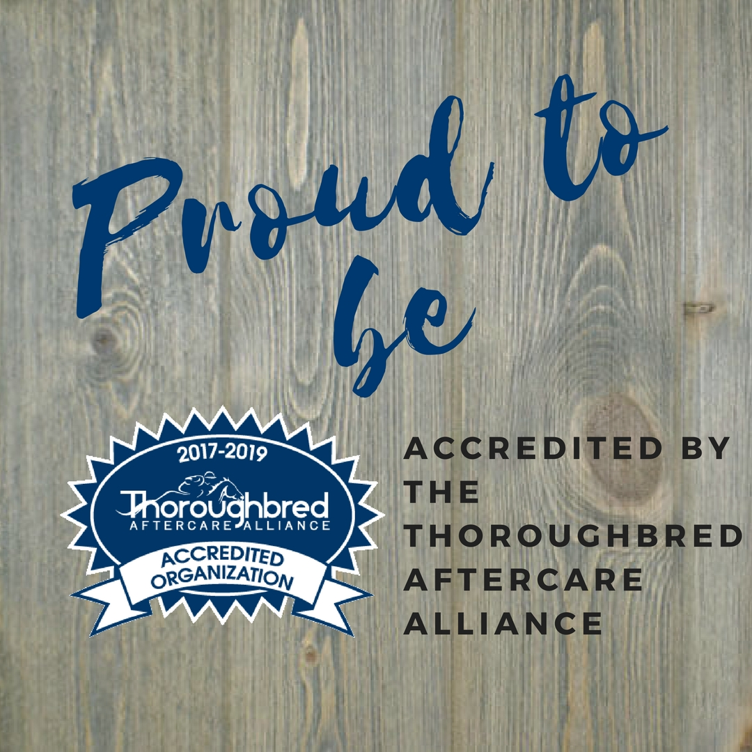 Proud to be Accredited 2017-2019 Instagram (1).jpg
