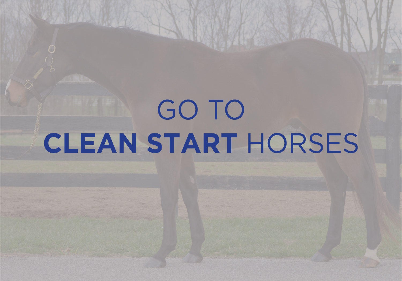 See Clean Start Horses 3.jpg