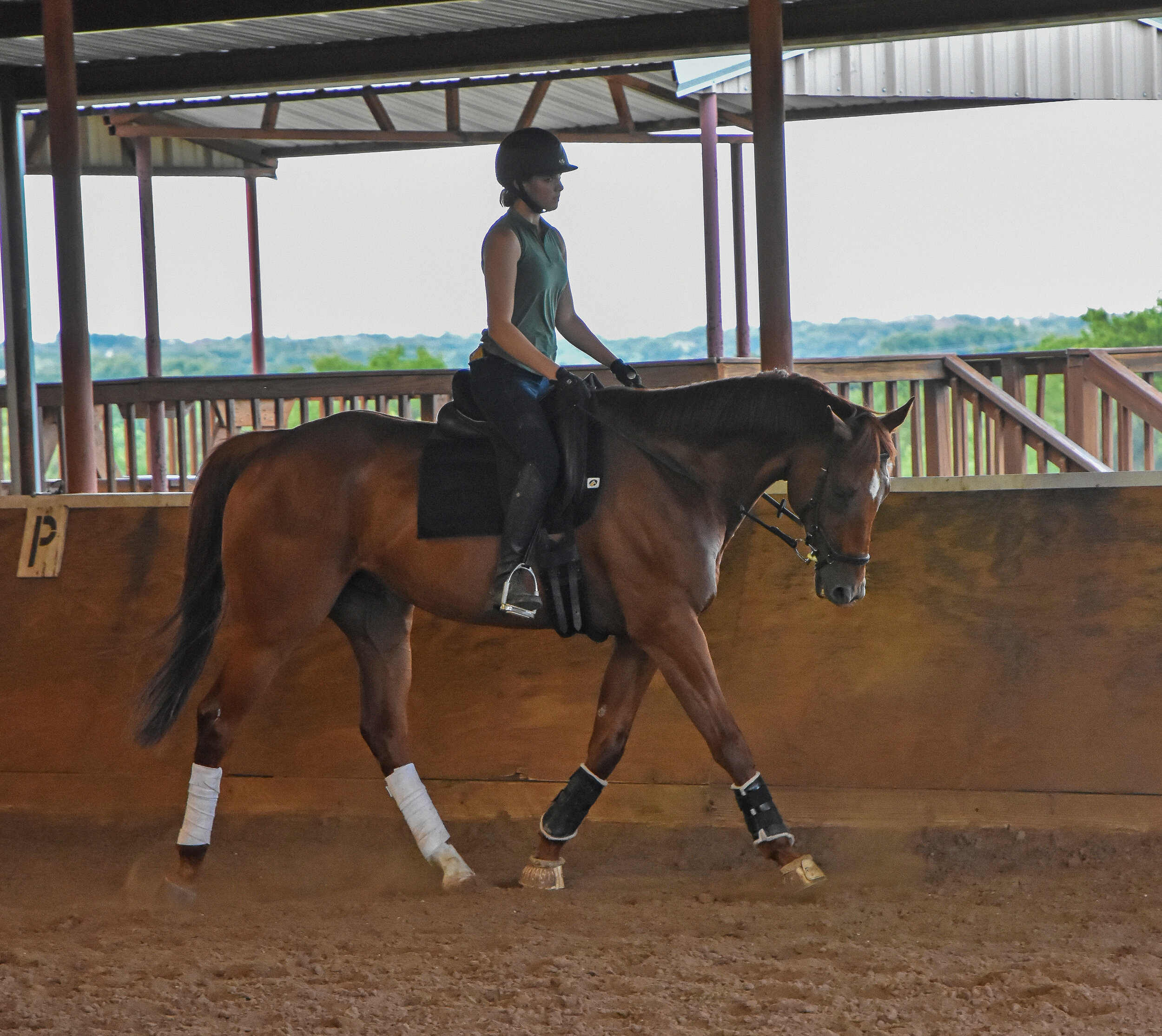 Sterling Thunder and adopter Meghan Adelman