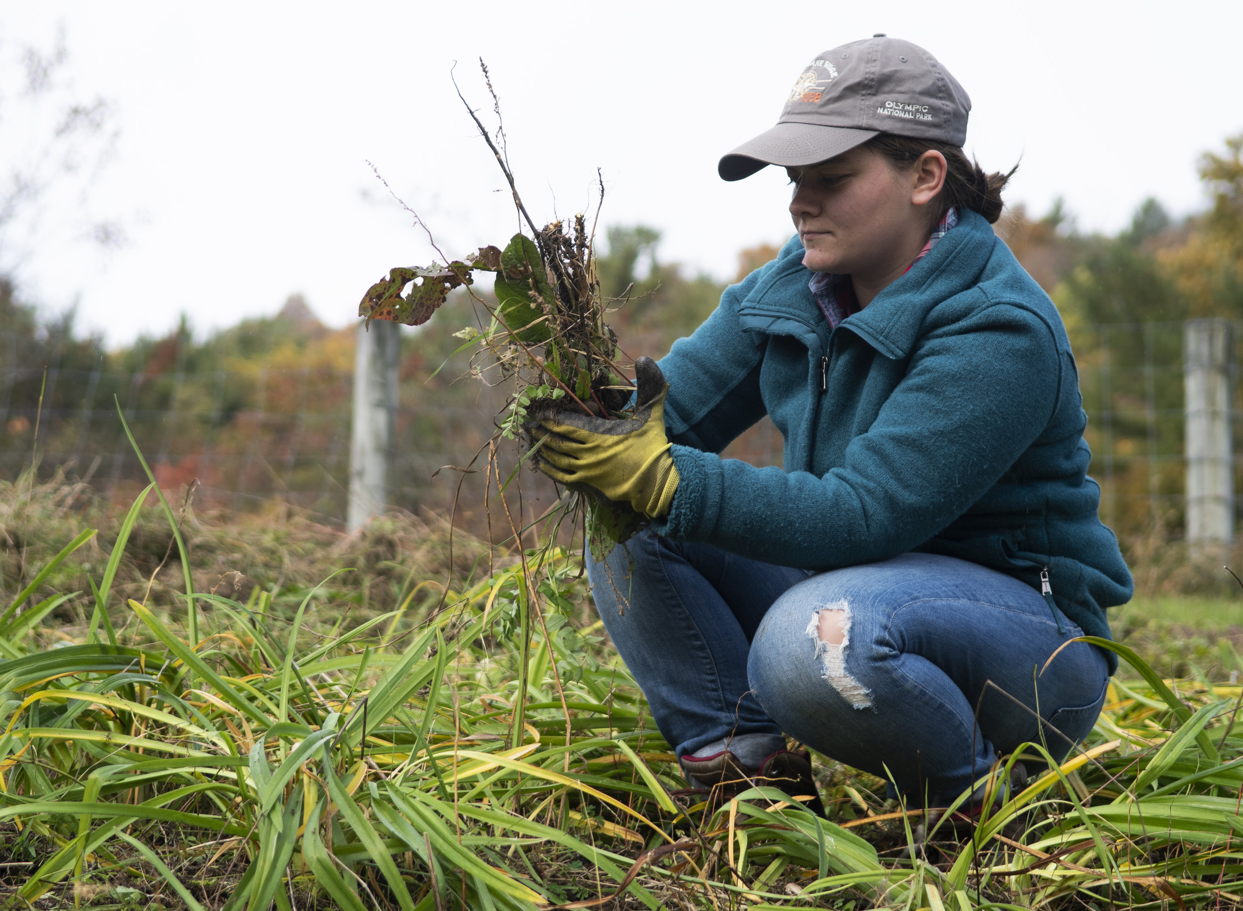 Deanna Homan (junior-plant science) pulls weeds during the Crop Mob event at The Barn on Valley View Road in Bellefonte on Nov. 3, 2018.