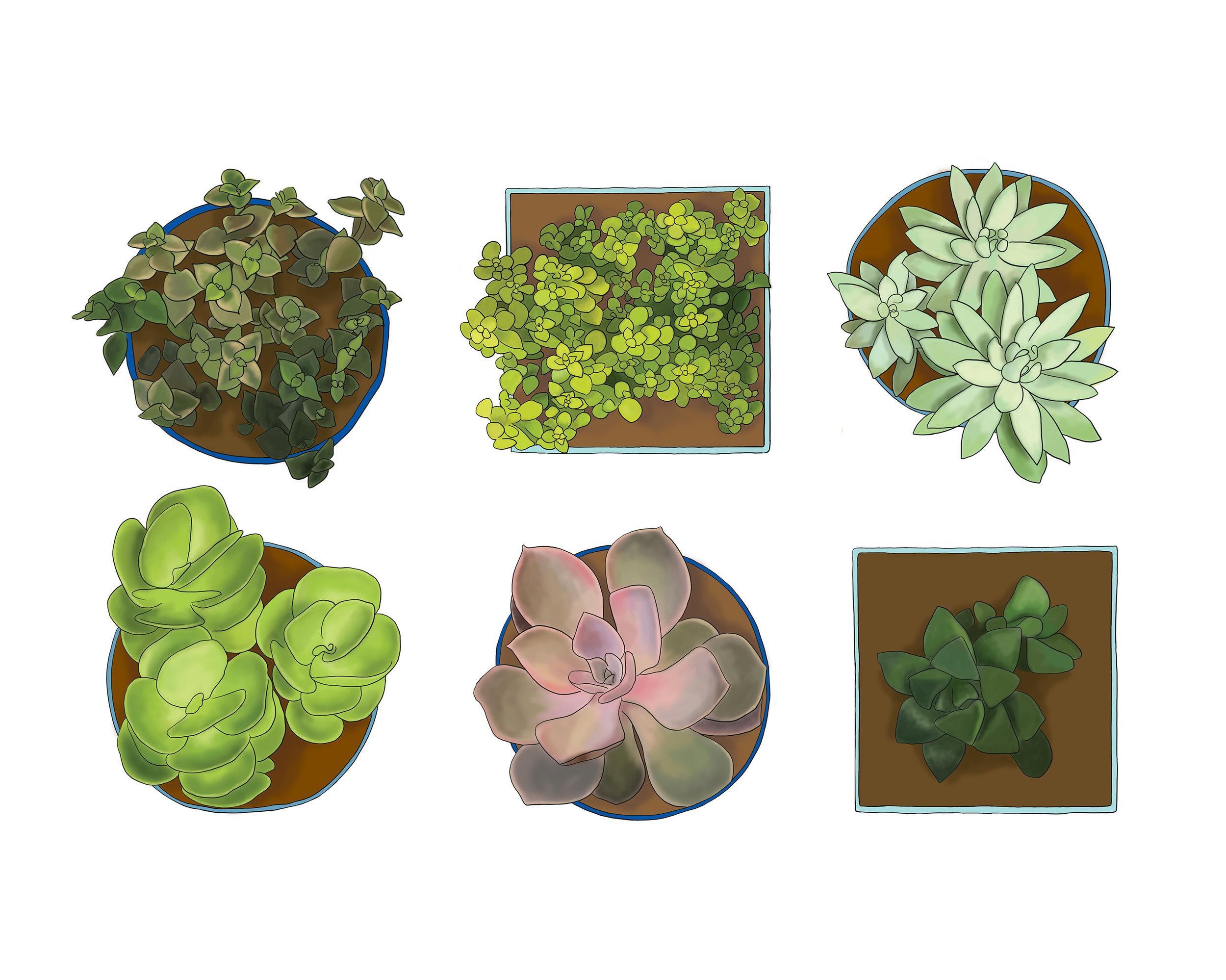 succulents6witheditsrgb8x10.jpg