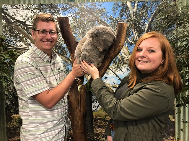 Reuben the koala graciously cracked open his eye for this photo 😂. Had the best time meeting all his pals at @featherdalewildlifepark 🐨 💛