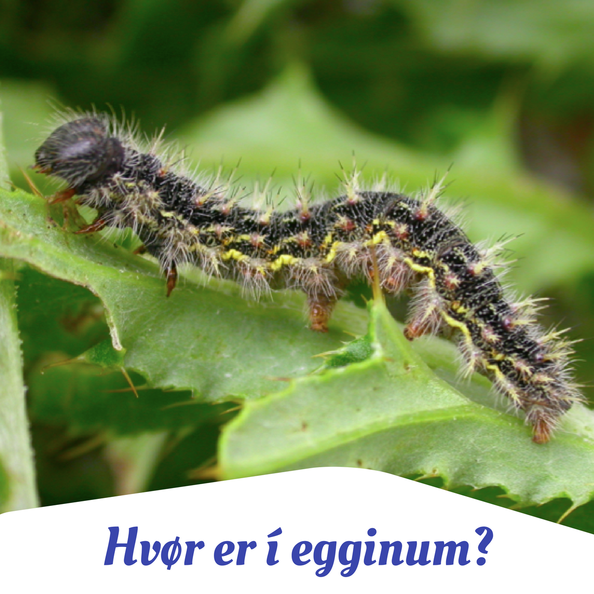 egginum.png