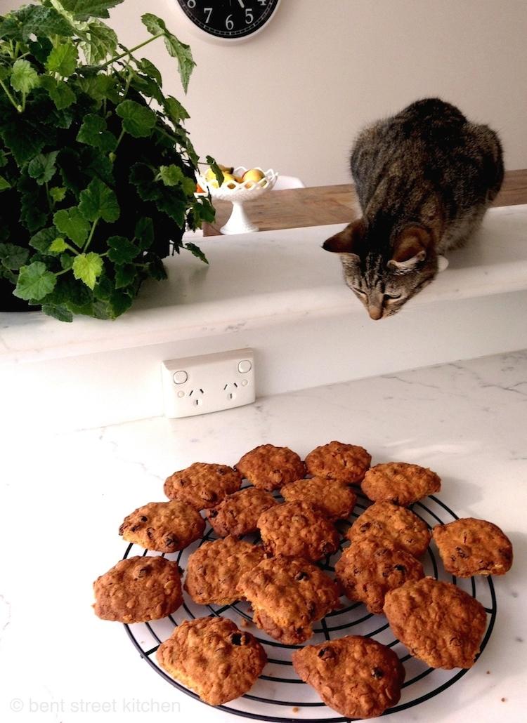 Miso, Bent Street Kitchen's Little Helper.