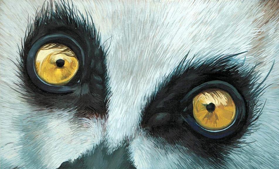 Lemur Low.jpg