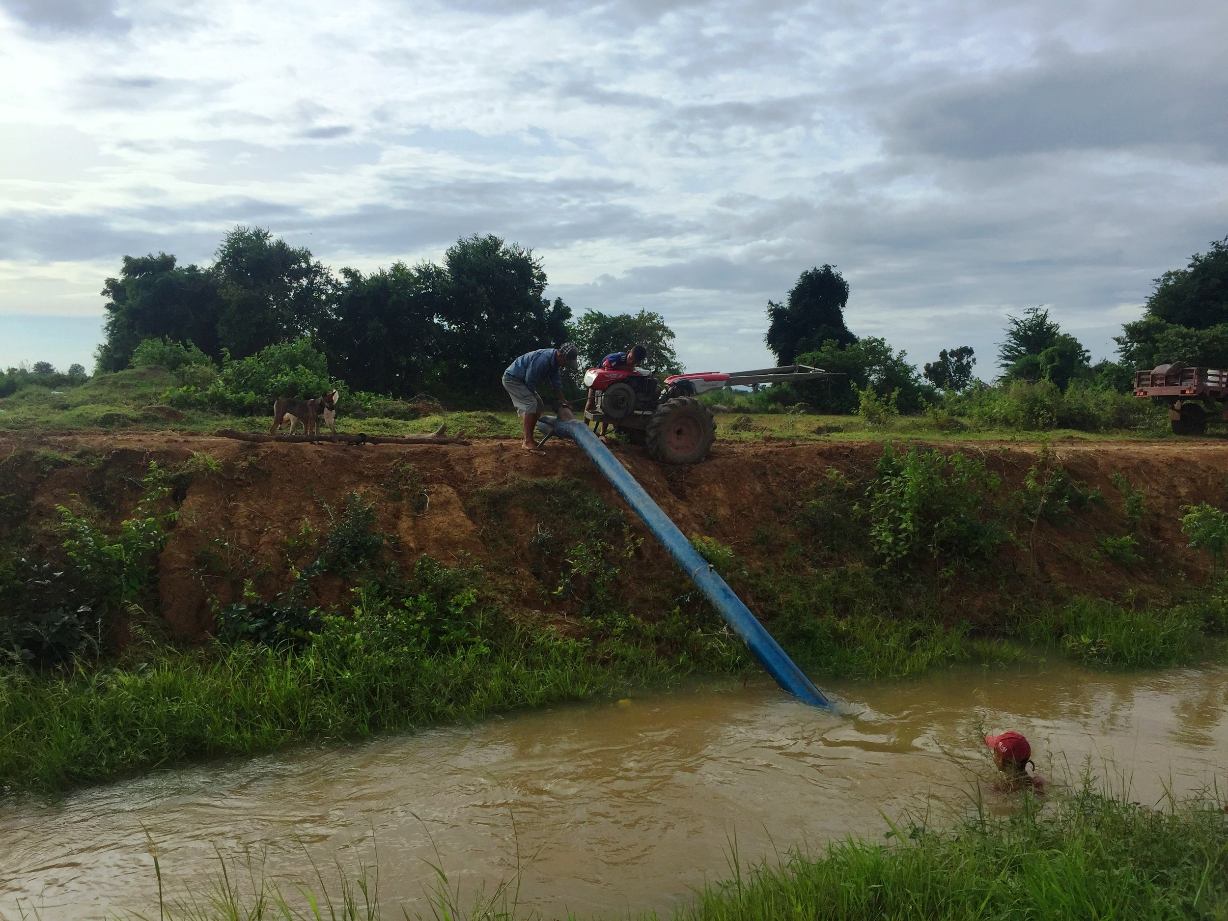 Pumping Water For Rice