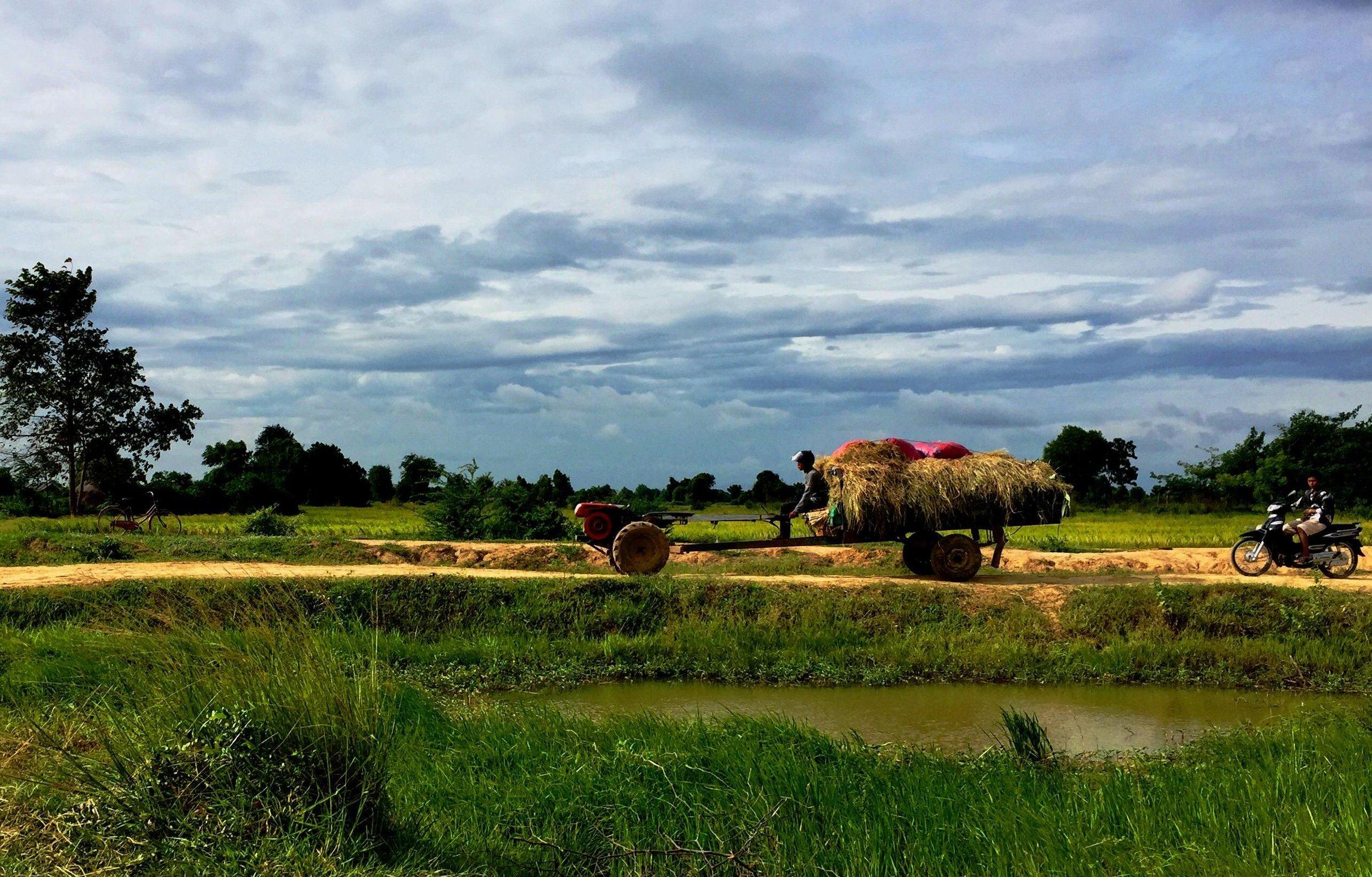 Battambang Rice Field