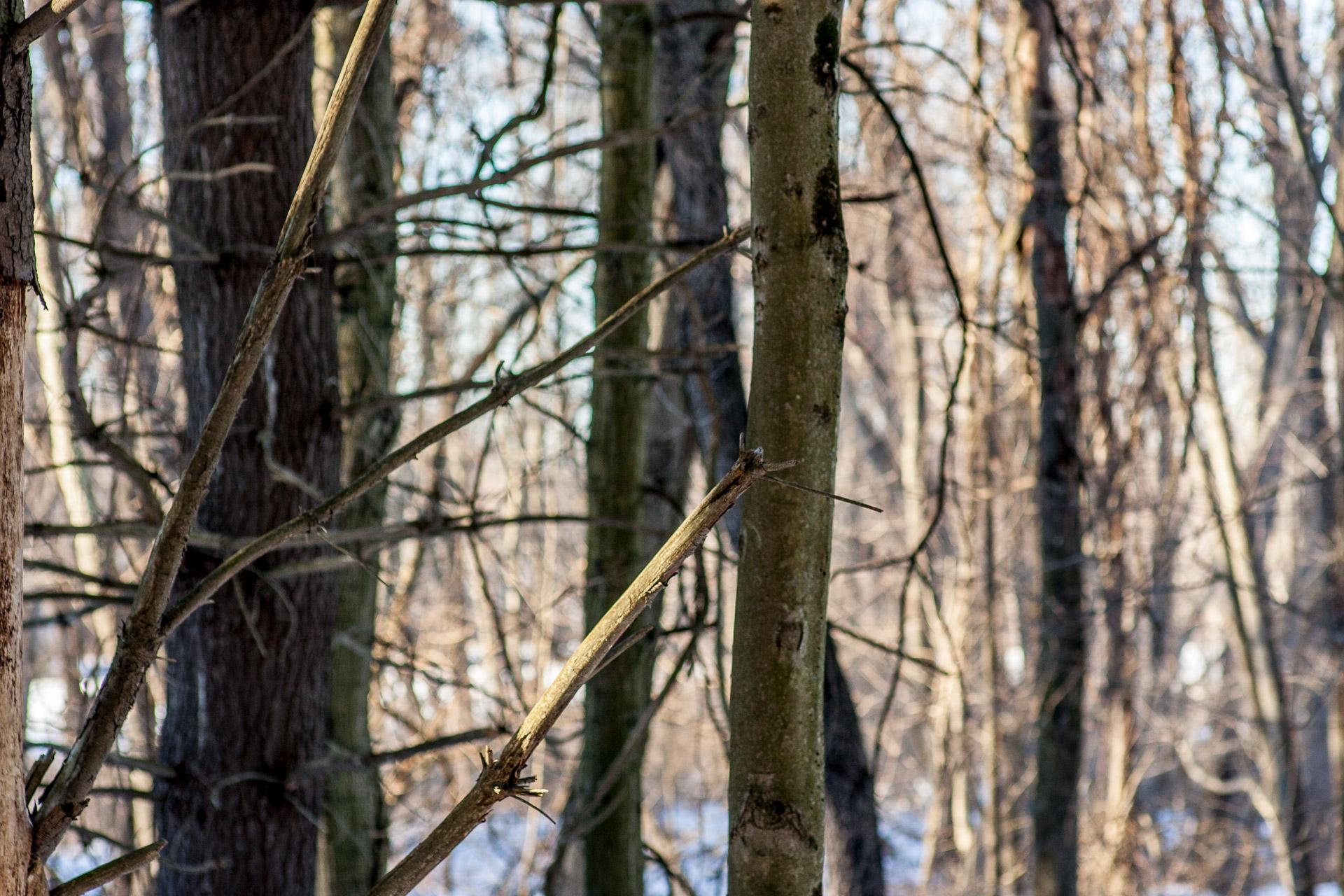 Woods Walk 02-20-2017-Chris-Page-125.jpg