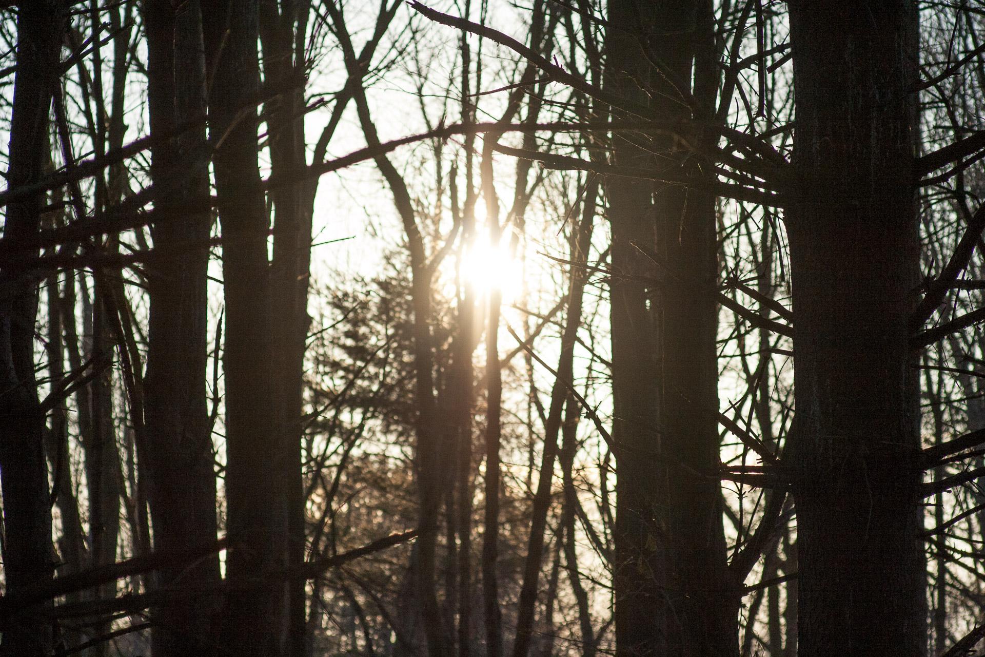 Sunset Light 02-22-2017-Chris-Page-27.jpg
