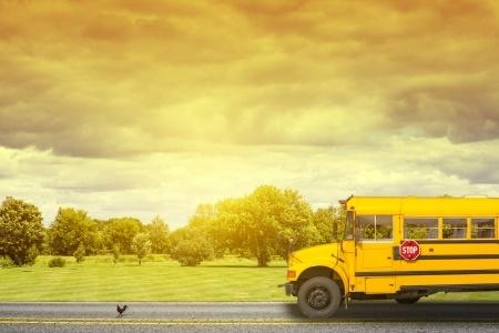 21706829_S_School_Bus_Trees_Road_Morning_Back_To_School.jpg