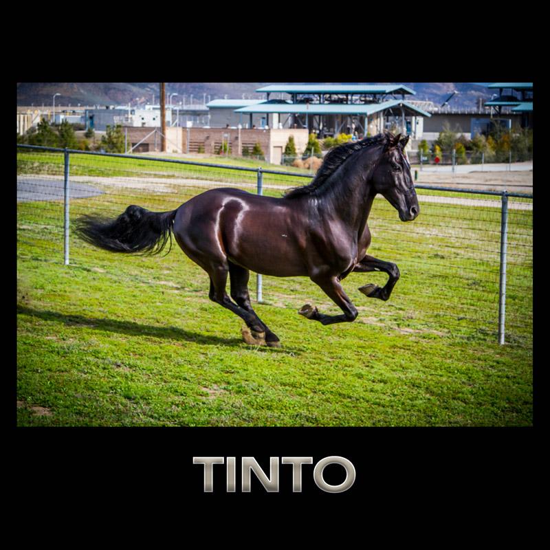 TINTO
