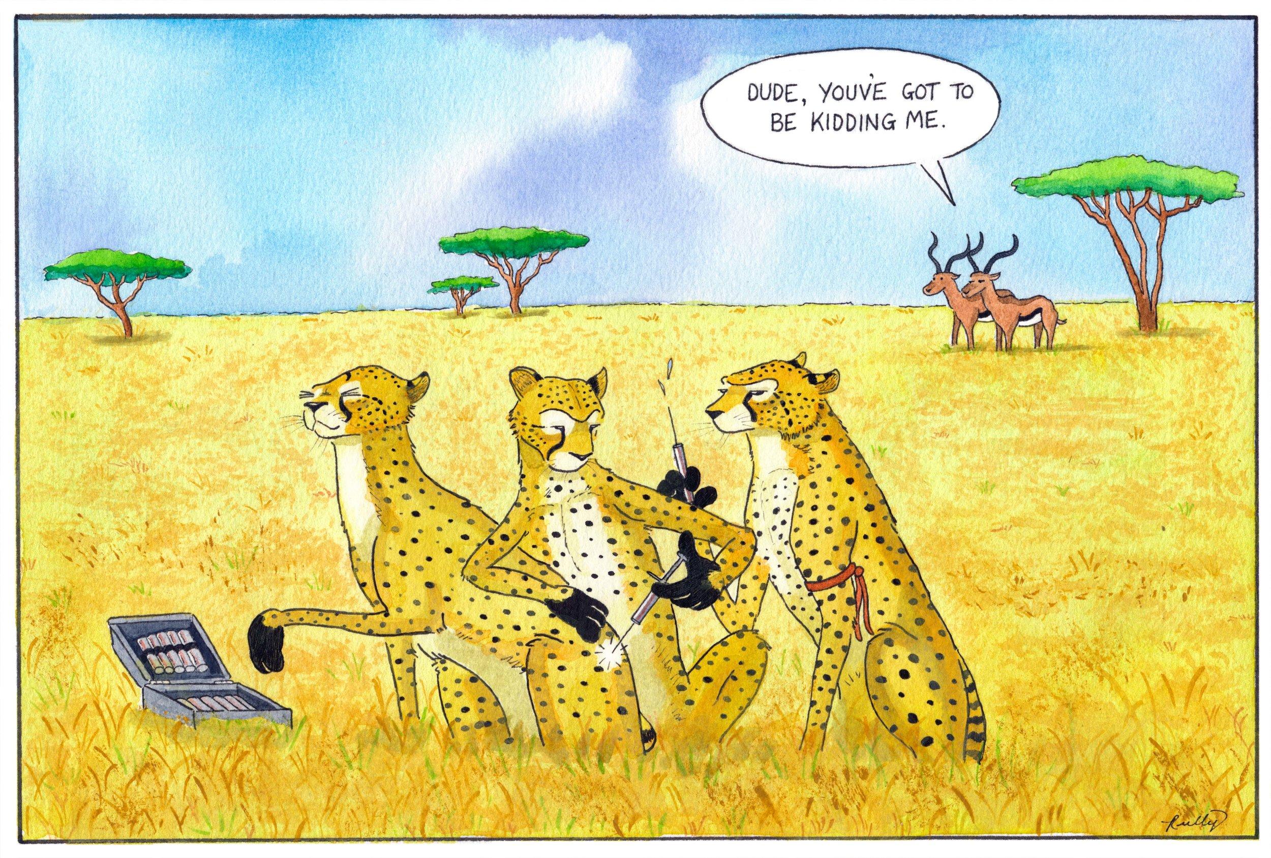 cheetahs_web.jpg