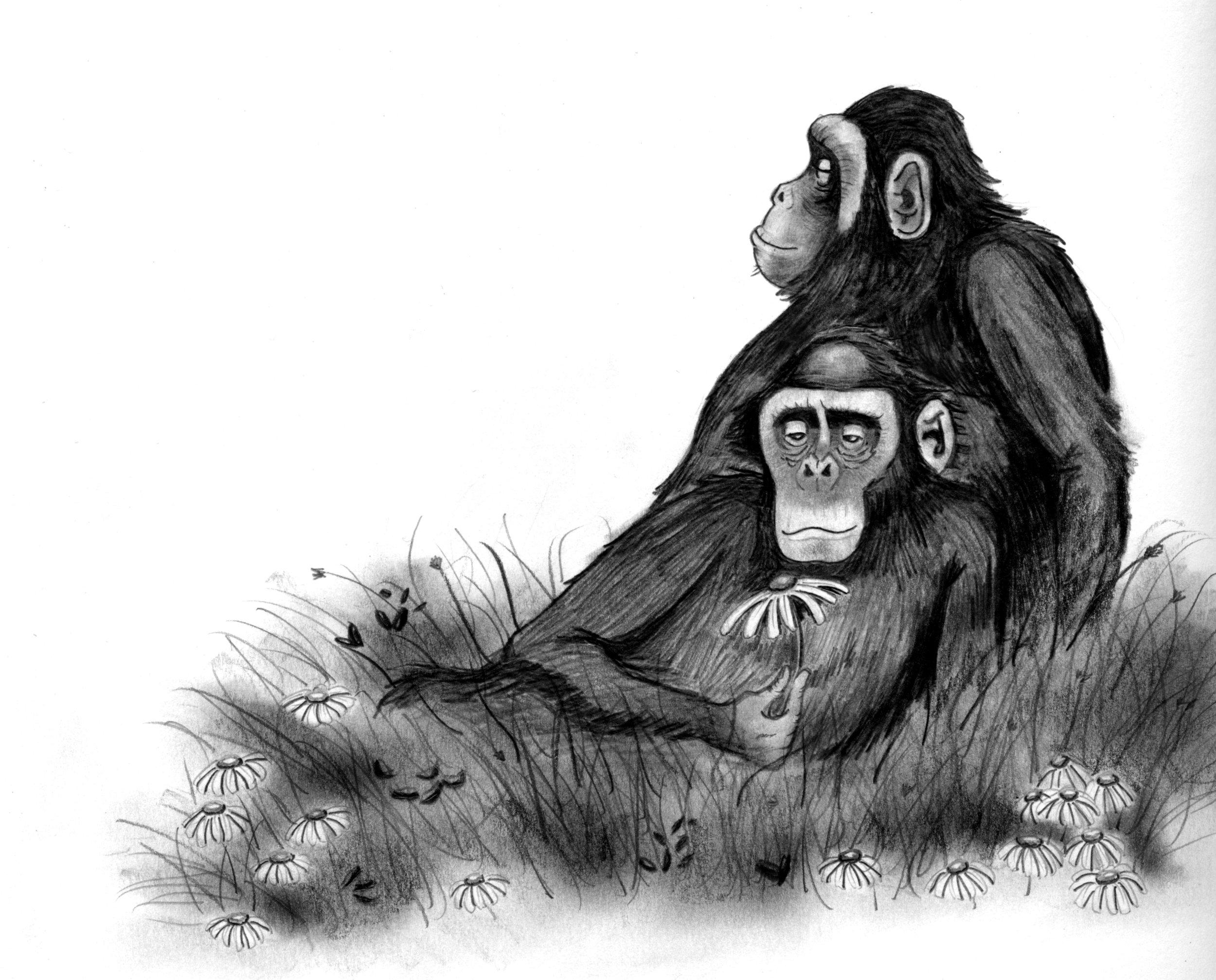 chimps_flower.jpeg