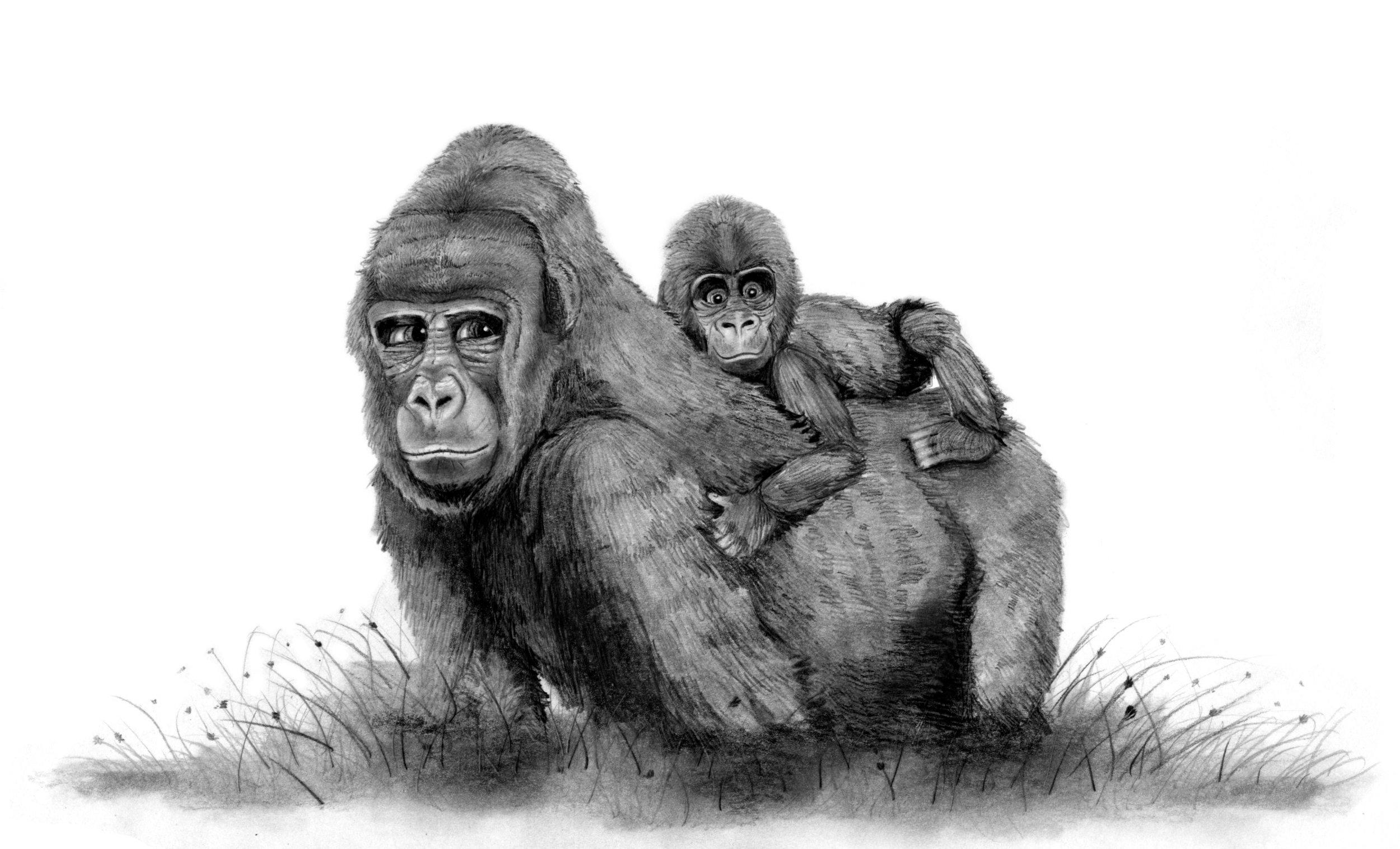 gorilla_momma.jpeg