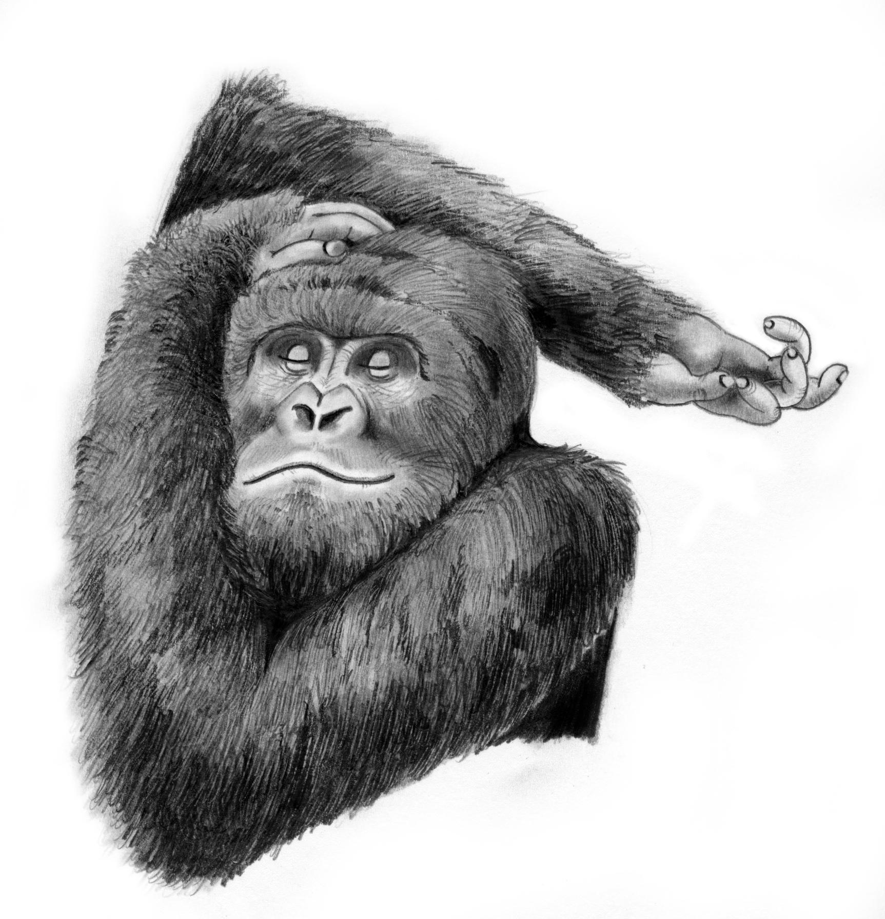 gorilla_pose.jpeg